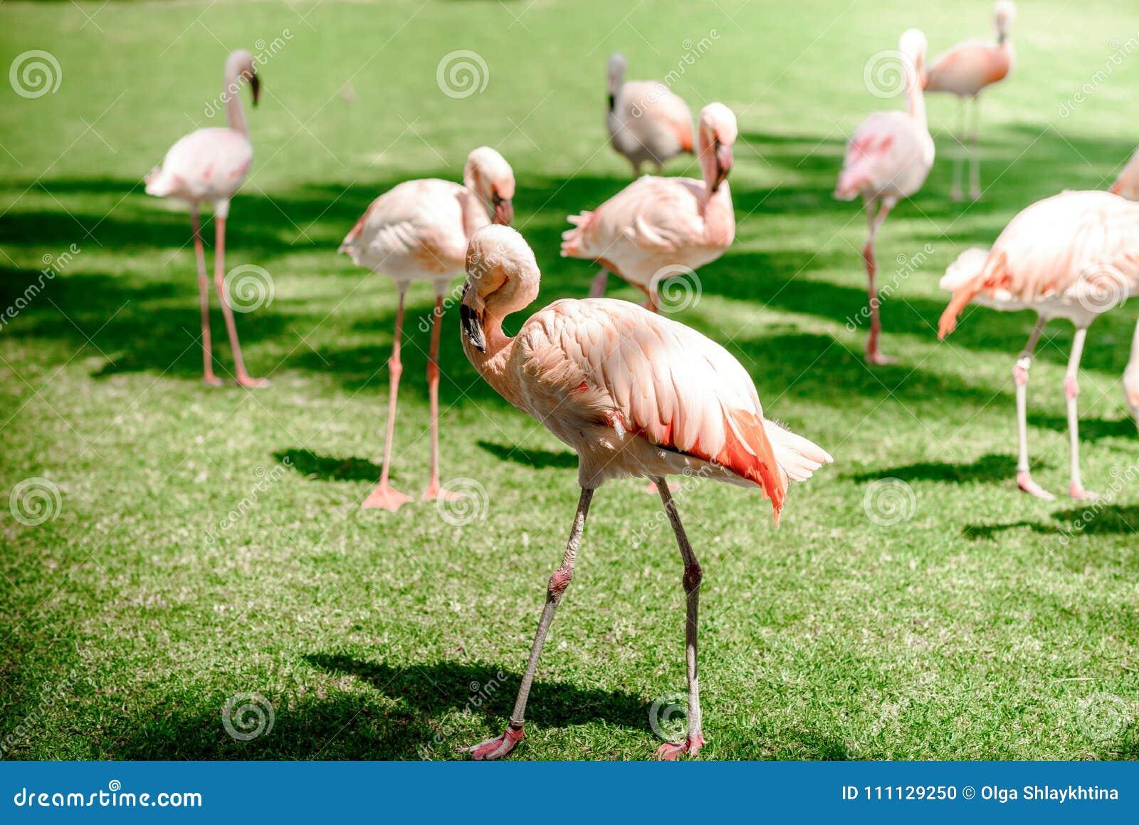 Μεγάλο δημόσιο πουλί