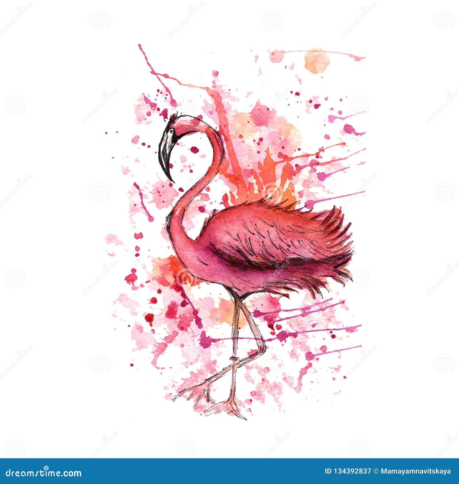 Ρόδινο φλαμίγκο, παφλασμοί watercolor, ζωηρόχρωμες πτώσεις χρωμάτων Όμορφη διανυσματική απεικόνιση που απομονώνεται στο άσπρο υπό