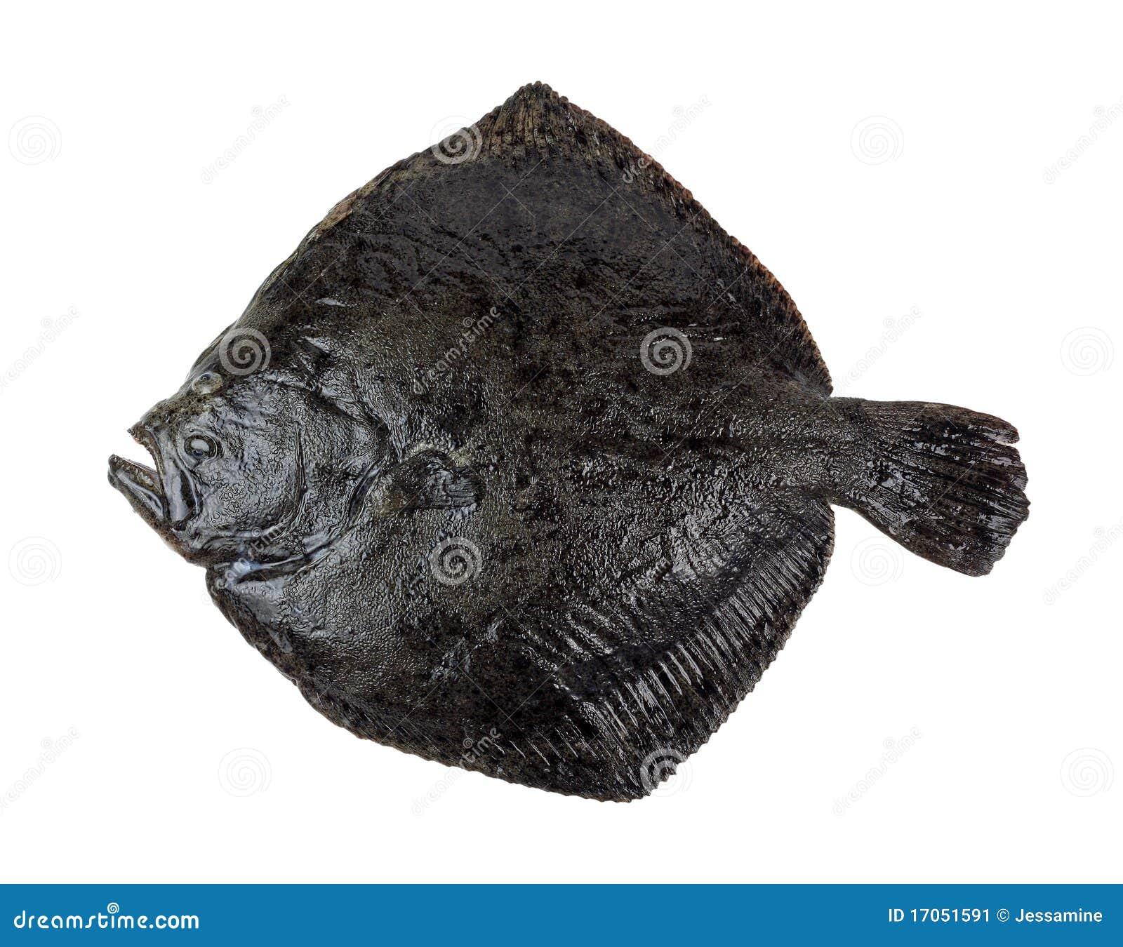 ρόμβος ψαριών