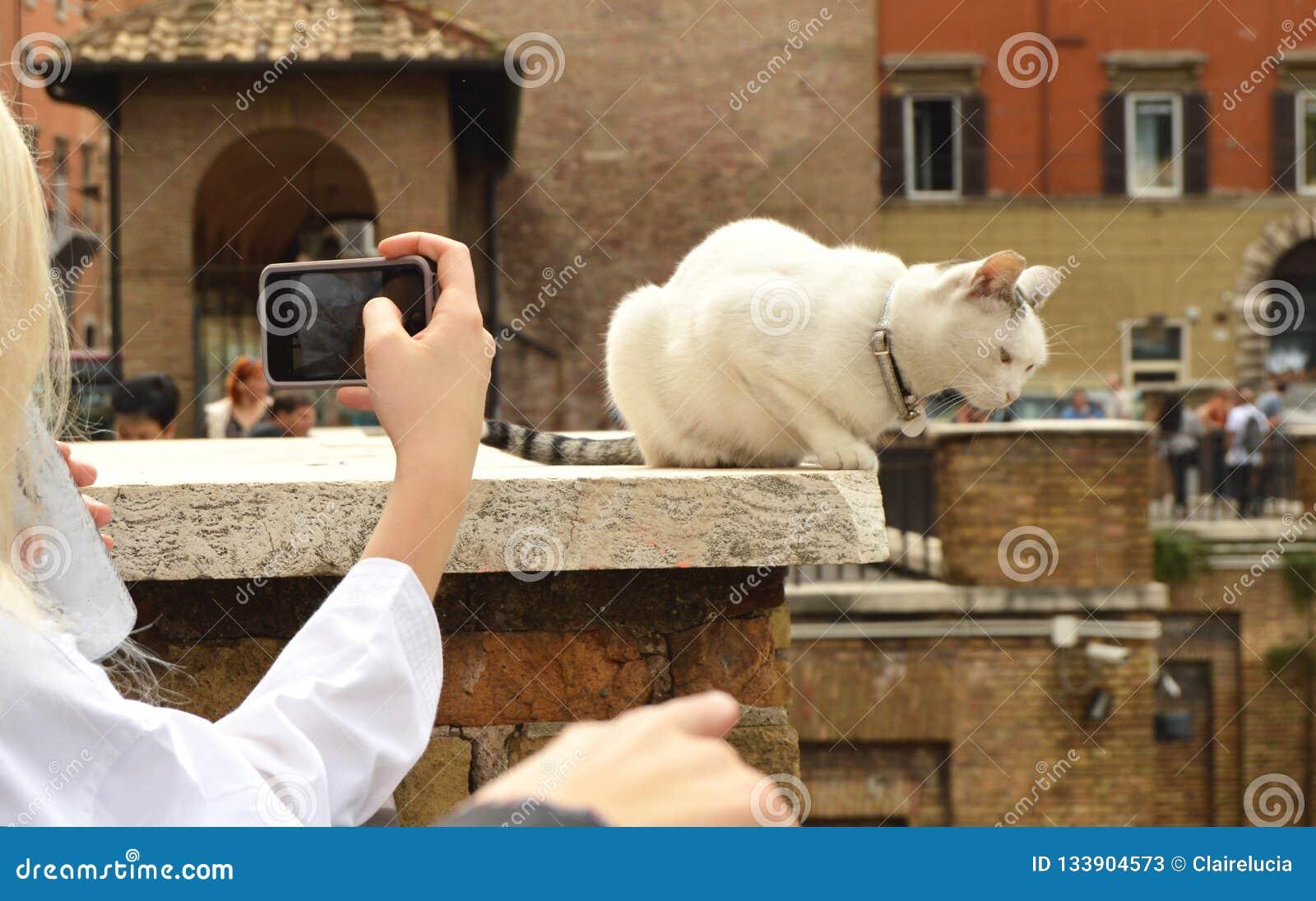 Ρώμη, Ιταλία 7 Οκτωβρίου 2018: κορίτσι που παίρνει τις εικόνες στη χαριτωμένη άσπρη συνεδρίαση γατών smartphone της Plaza Largo D