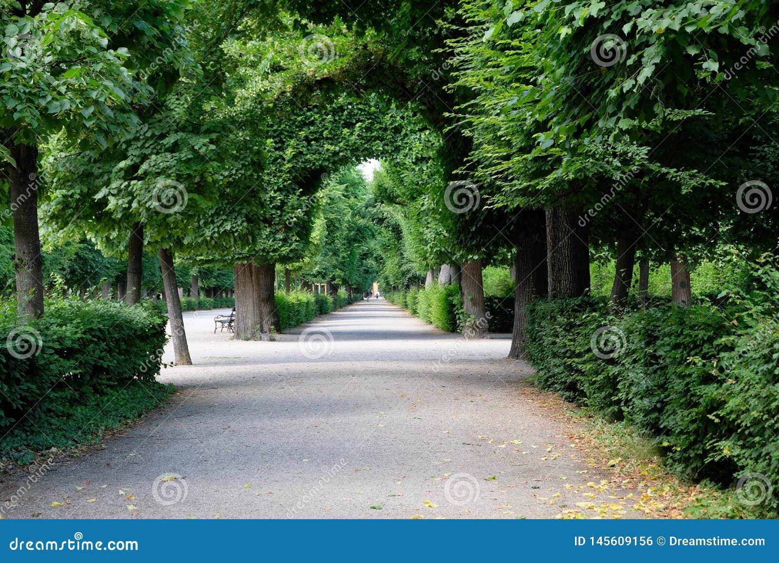 Σήραγγα των δέντρων σε έναν αυστριακό κήπο