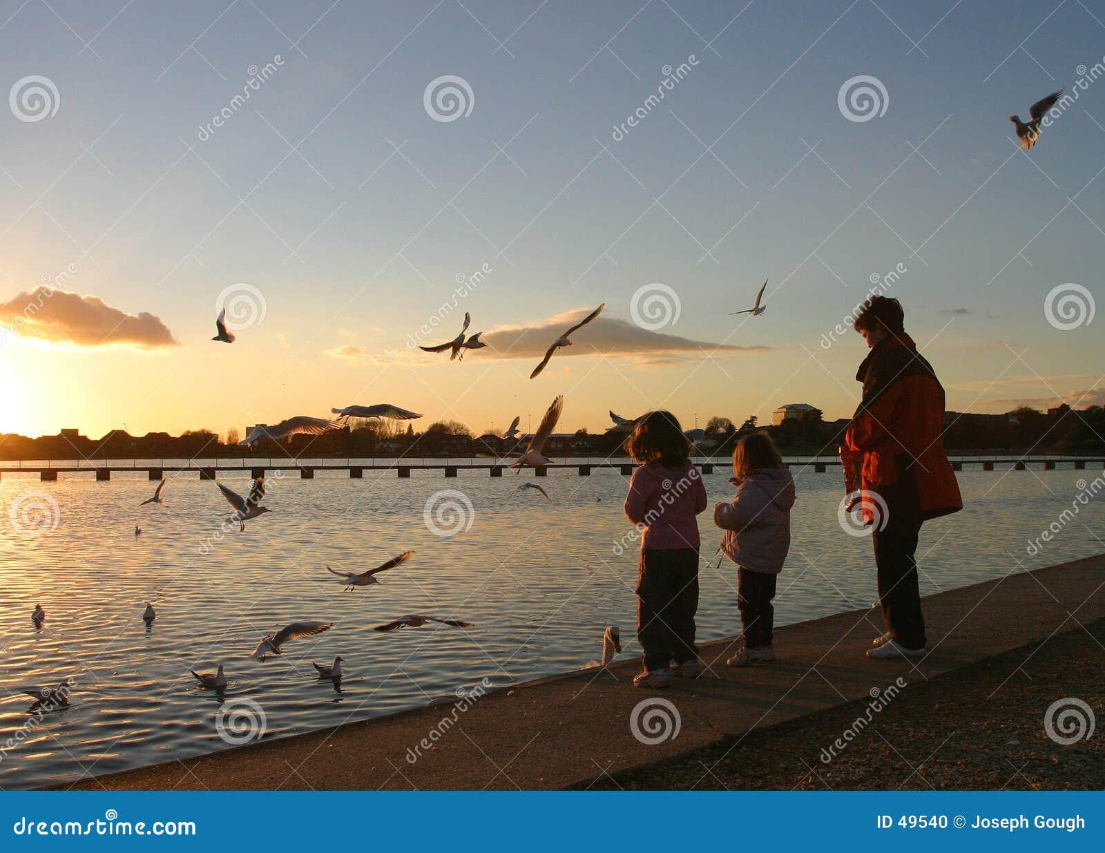 σίτιση πουλιών