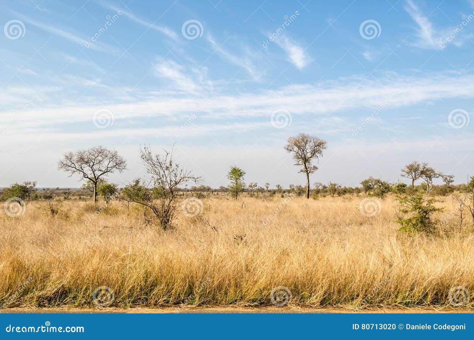 Σαβάνα, εθνικό πάρκο Kruger διάσημα βουνά kanonkop της Αφρικής κοντά στο γραφικό αμπελώνα νότιων άνοιξη