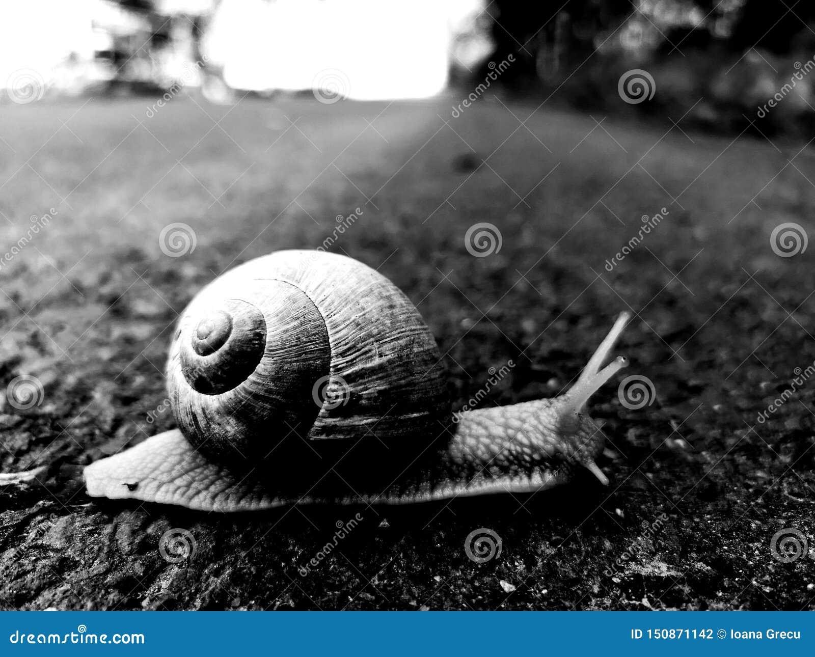 Σαλιγκάρι στο δρόμο που κινείται αργά