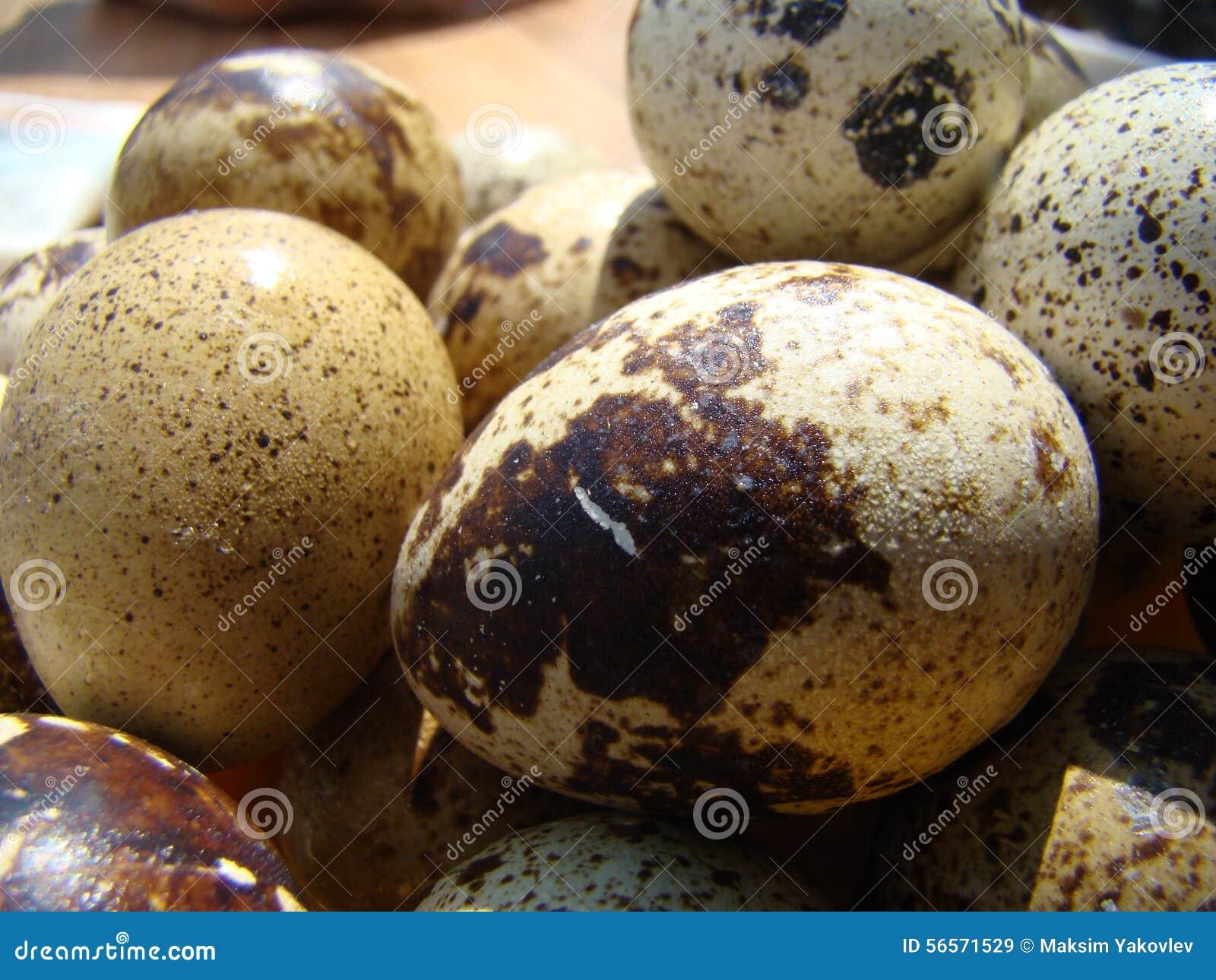 Download σαν αυγά ανασκόπησης πολλές νησοπέρδικες Στοκ Εικόνα - εικόνα από χρώμα, σιτηρέσιο: 56571529