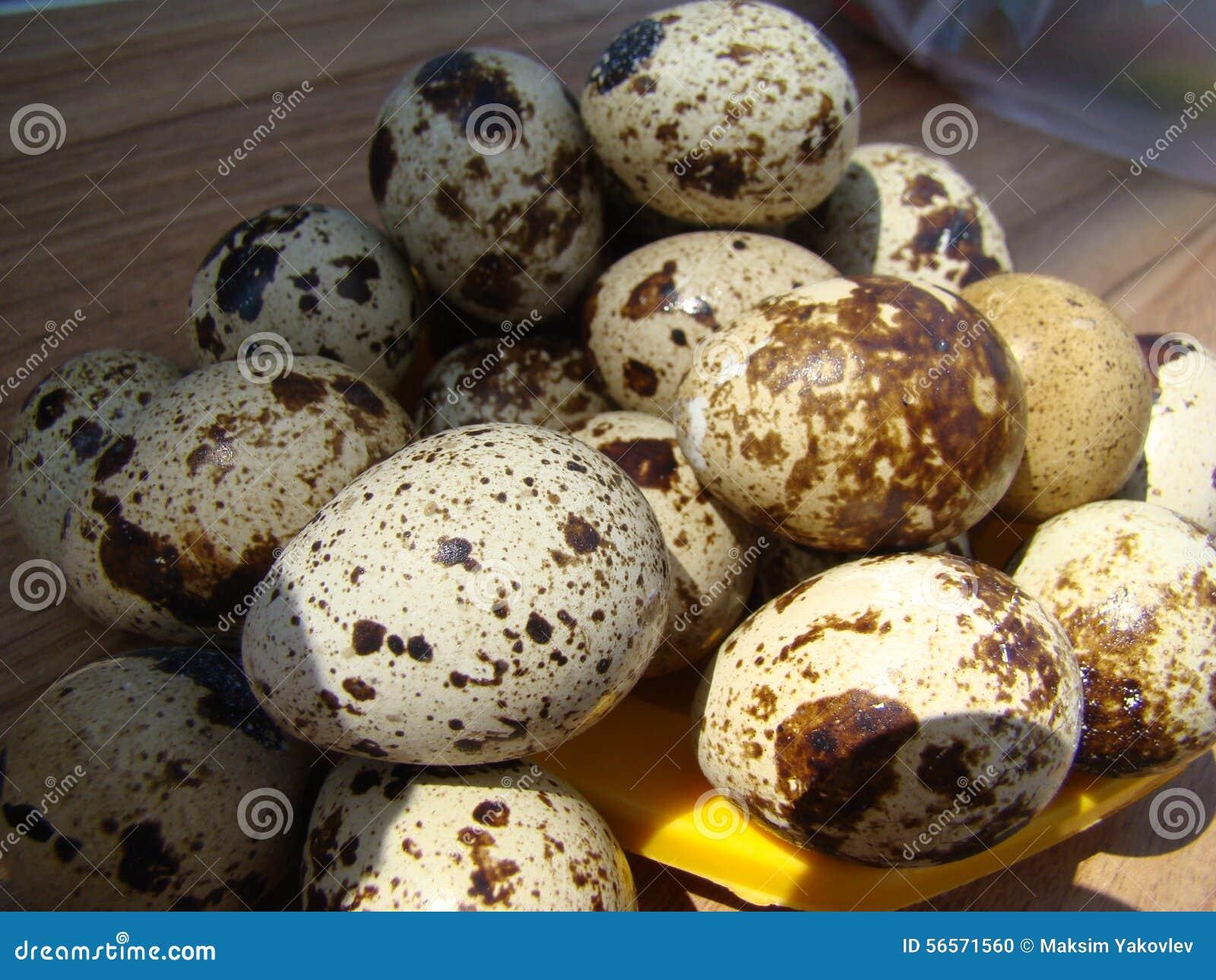 Download σαν αυγά ανασκόπησης πολλές νησοπέρδικες Στοκ Εικόνες - εικόνα από χρώμα, ακατέργαστος: 56571560