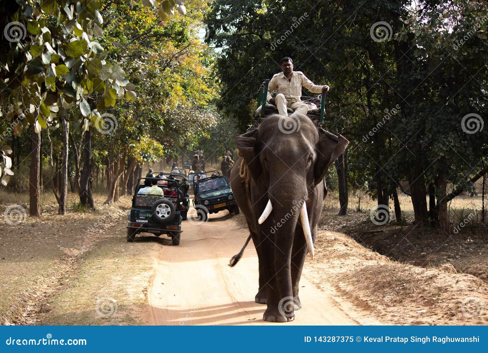 Σαφάρι ελεφάντων σε ένα εθνικό πάρκο