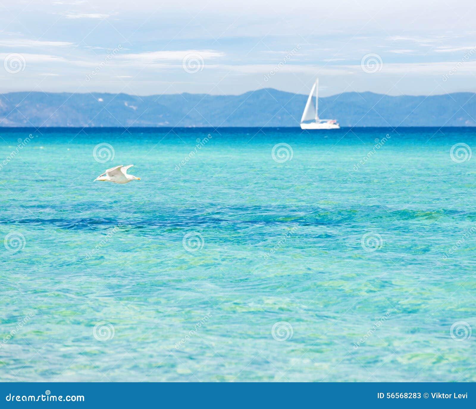 Download Σαφές υπόβαθρο νερού θάλασσας Seagul Στοκ Εικόνα - εικόνα από πέταγμα, ναυτικό: 56568283