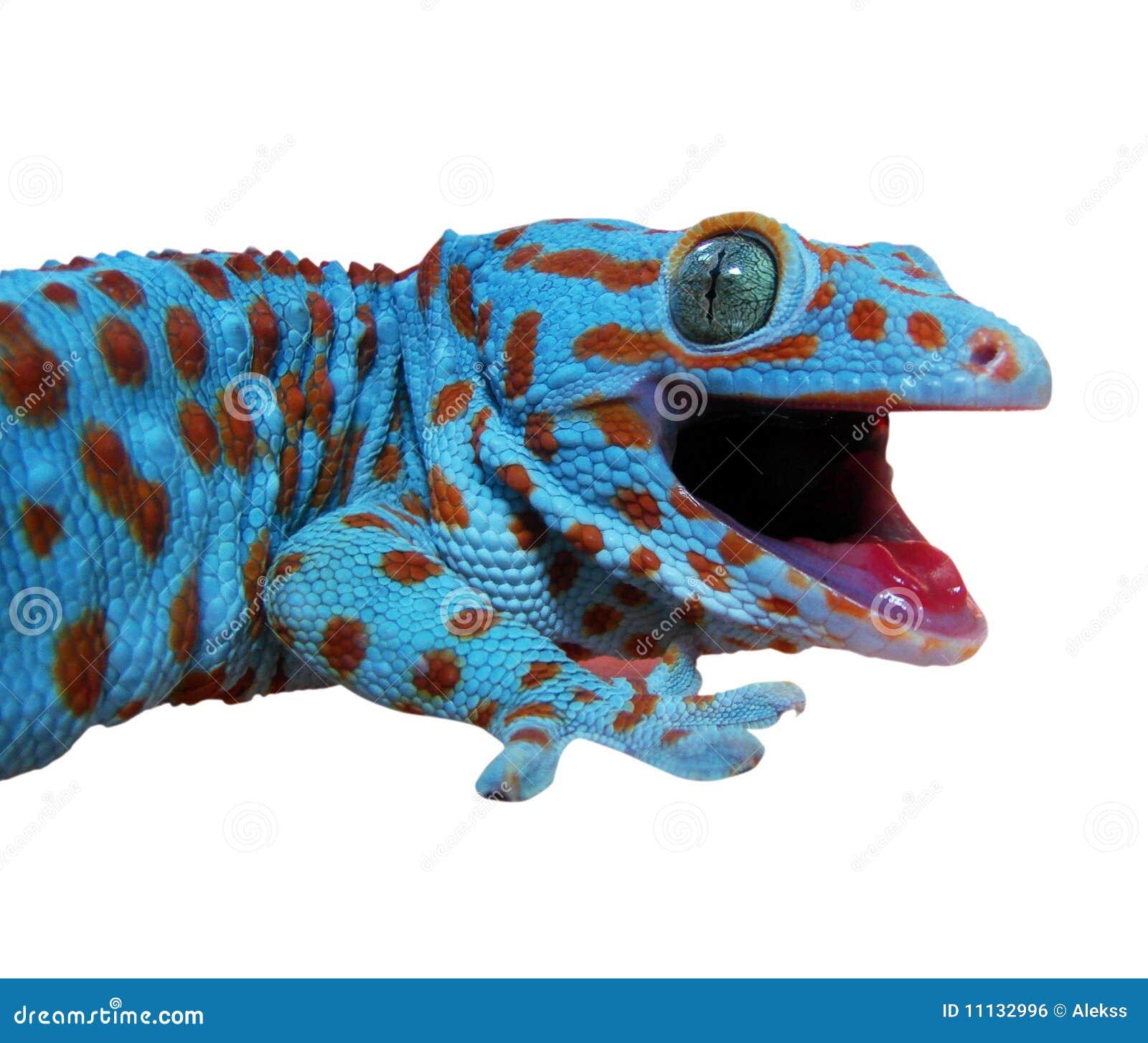 σαύρα gecko