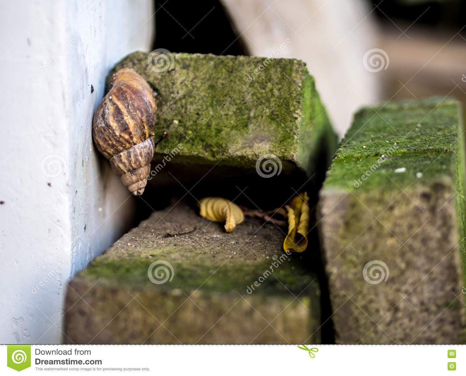 Σαλιγκάρι στον τοίχο