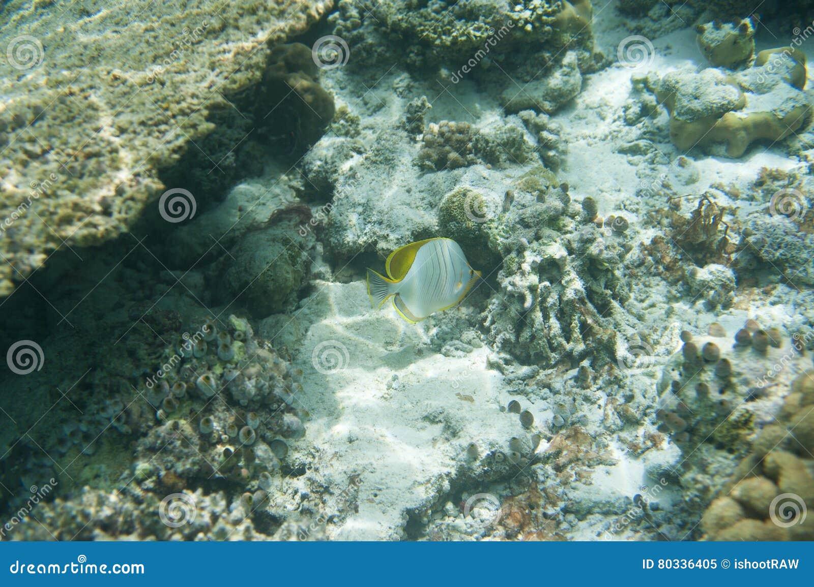 Σειρά ψαριών