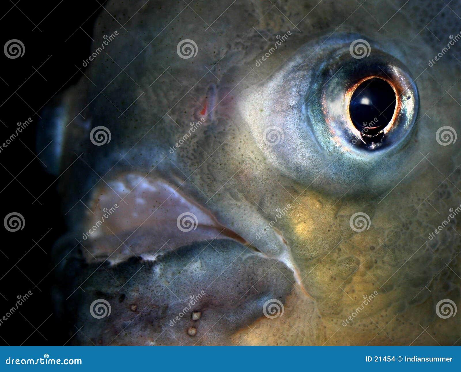 σειρά VII ψαριών