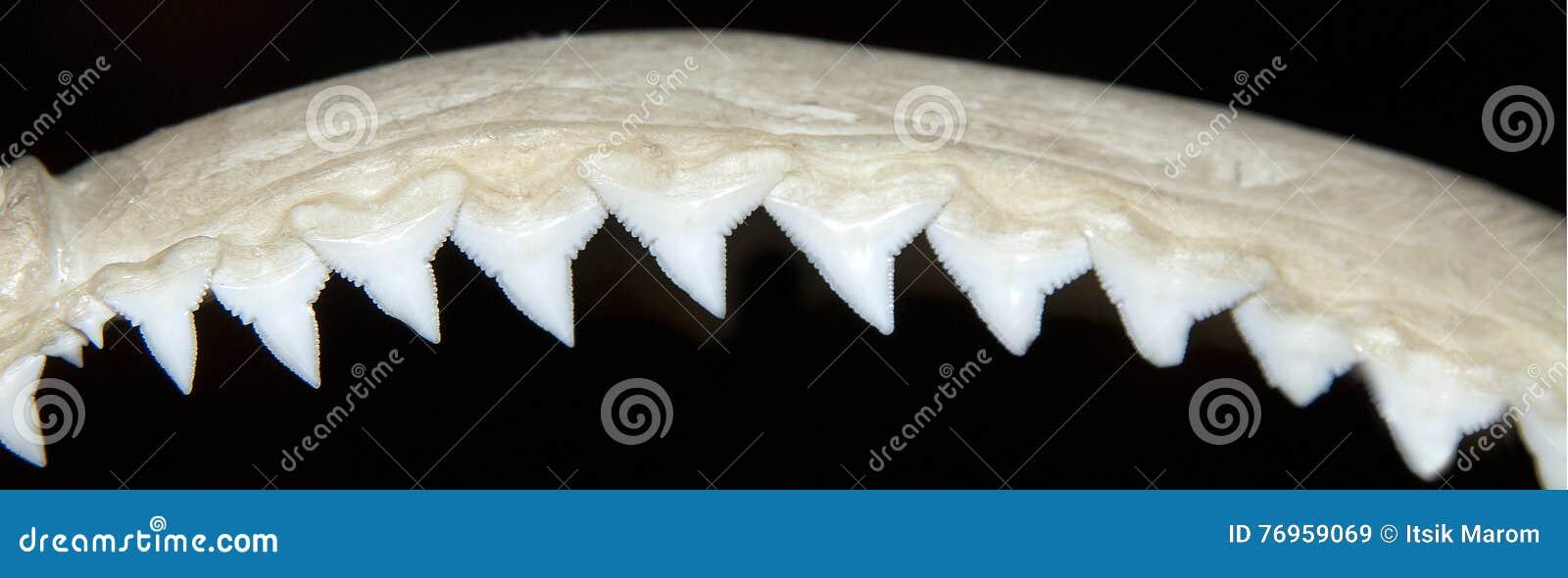 Σειρές δοντιών καρχαριών