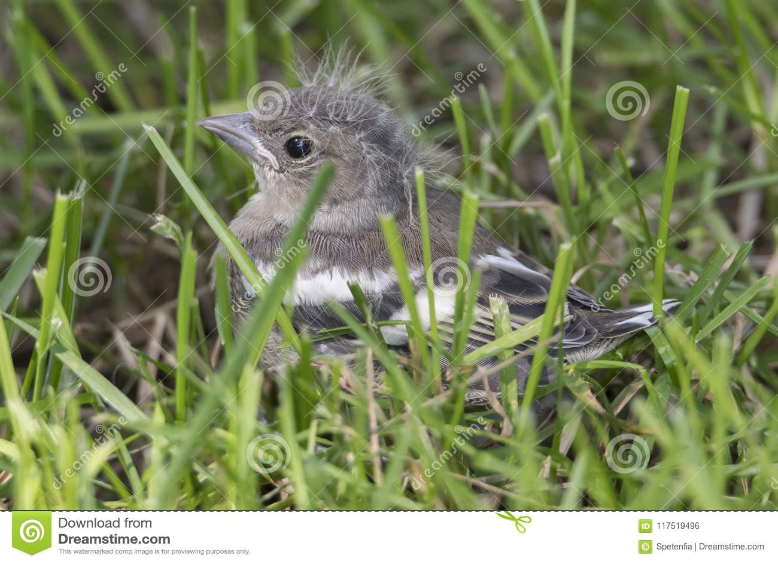 www μεγάλο πουλί φωτογραφίες ο Ομπάμα πίπα