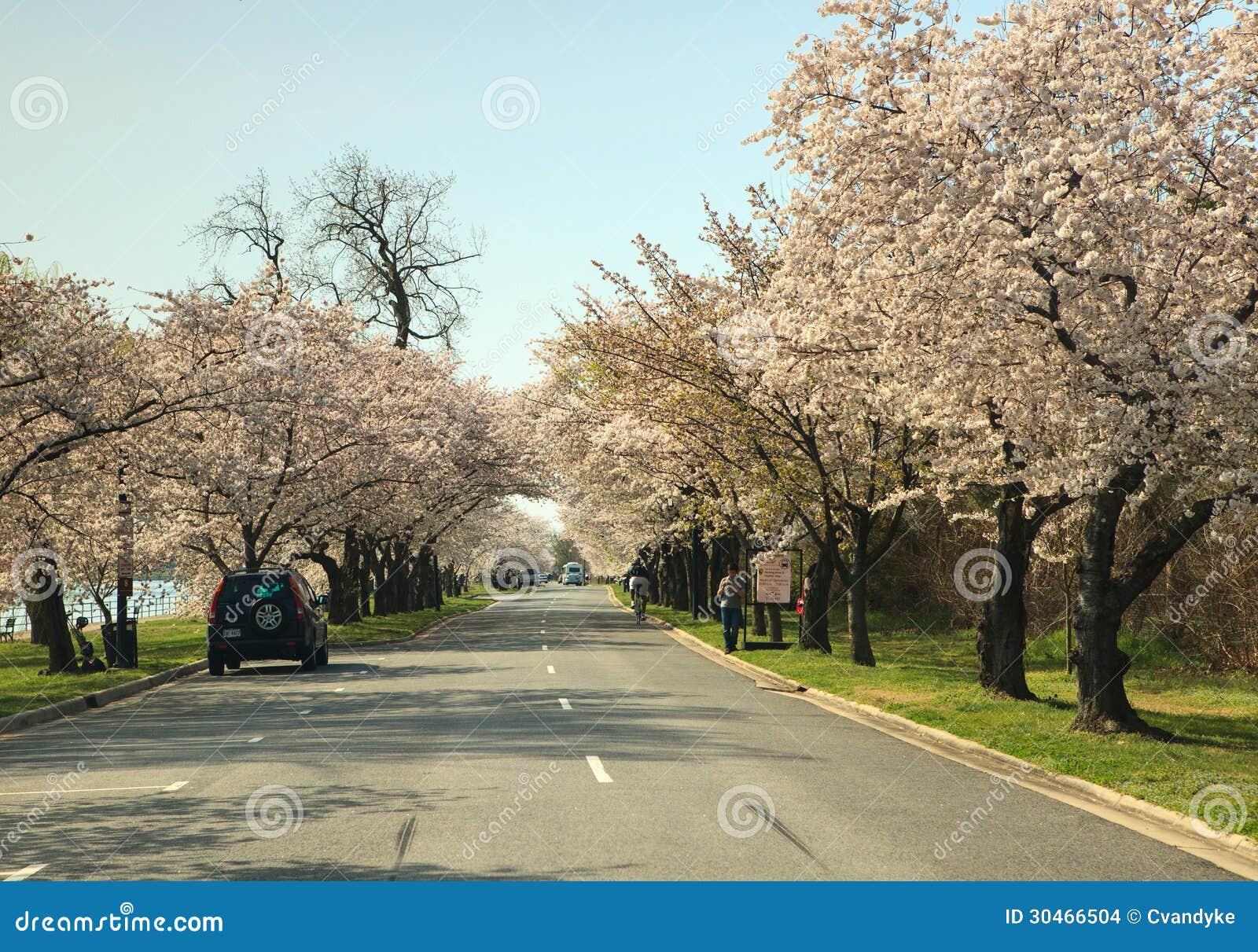 Σημείο Washington DC Hains που ευθυγραμμίζεται με τα δέντρα κερασιών