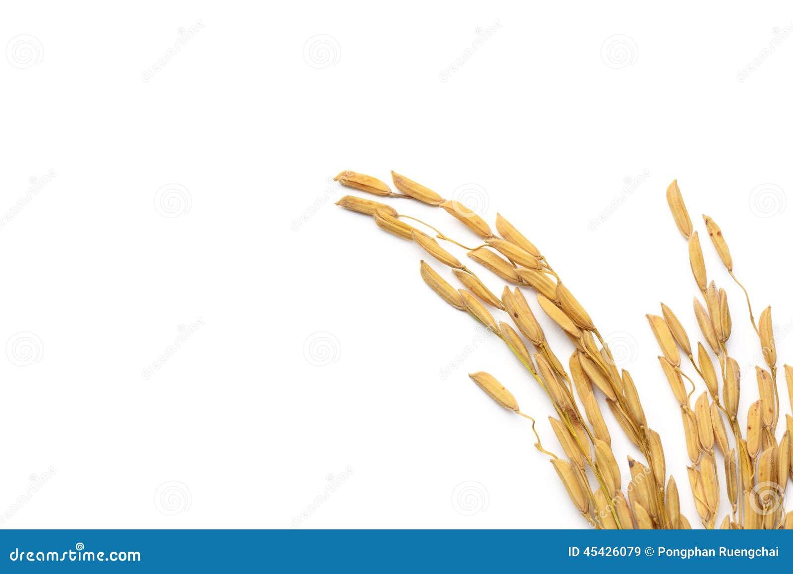 Σιτάρι ρυζιού
