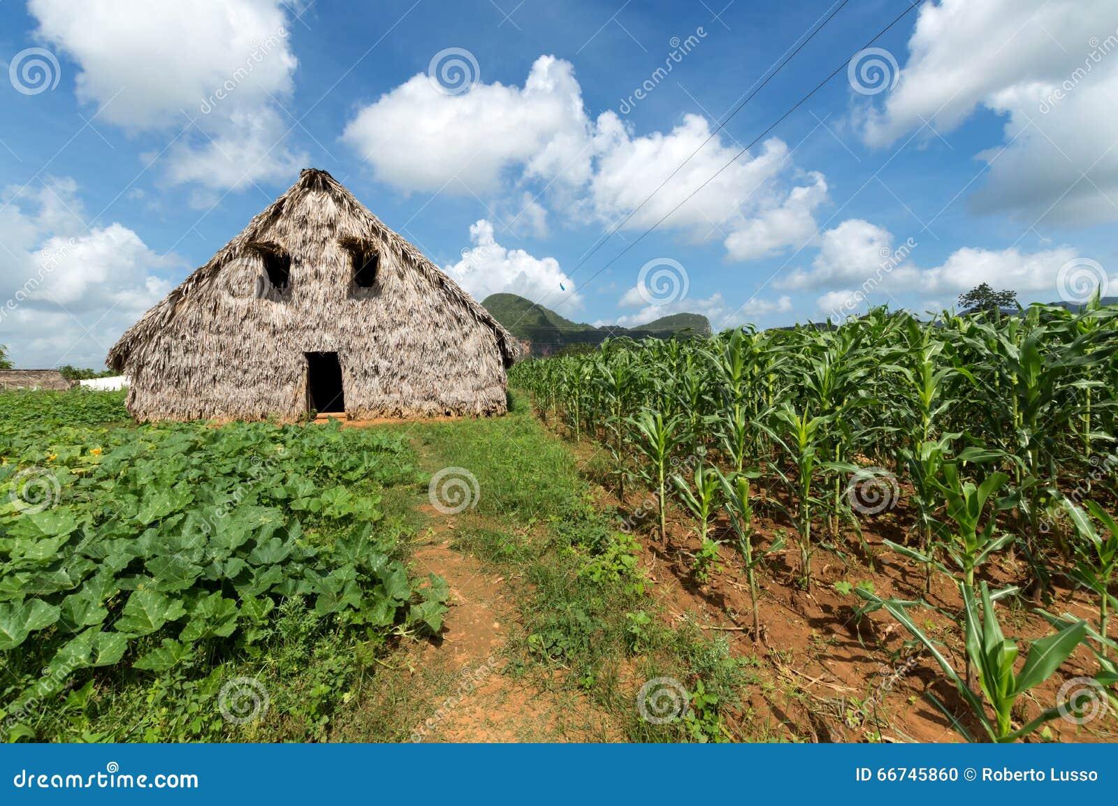 Σιταποθήκη καπνών στην κοιλάδα Vinales, Κούβα