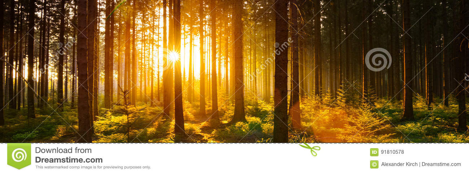 Σιωπηλό δάσος την άνοιξη με τις όμορφες φωτεινές ακτίνες ήλιων