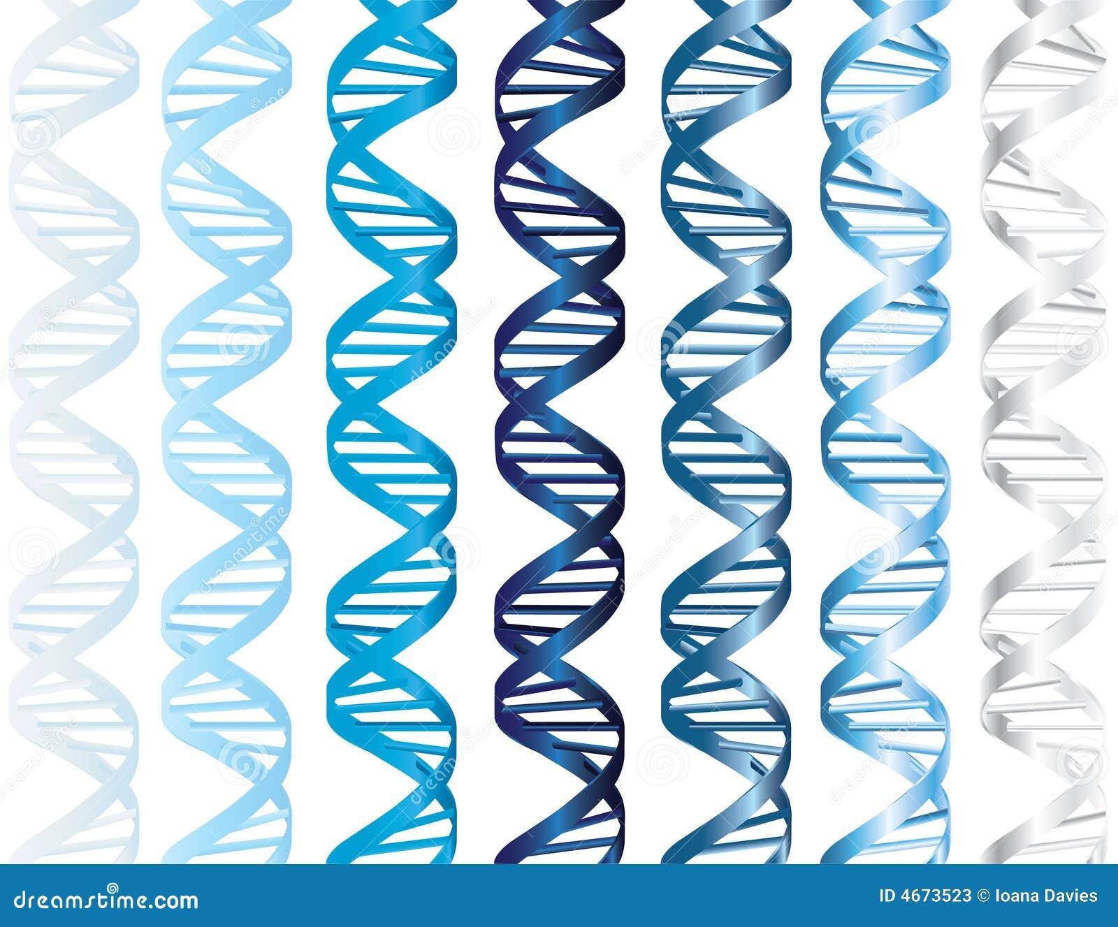 σκέλη DNA