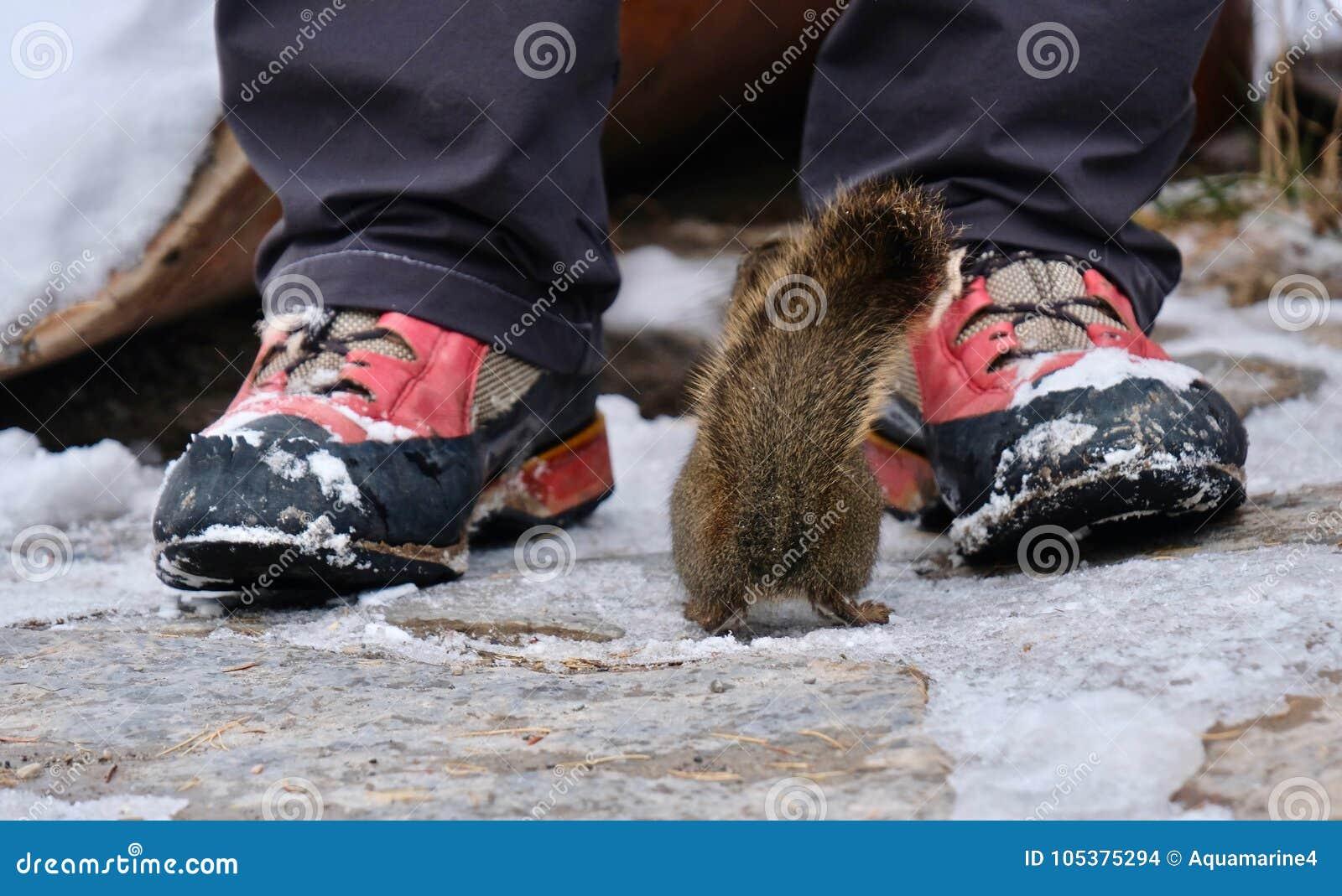Σκίουρος που αντιμετωπίζει τον άνθρωπο