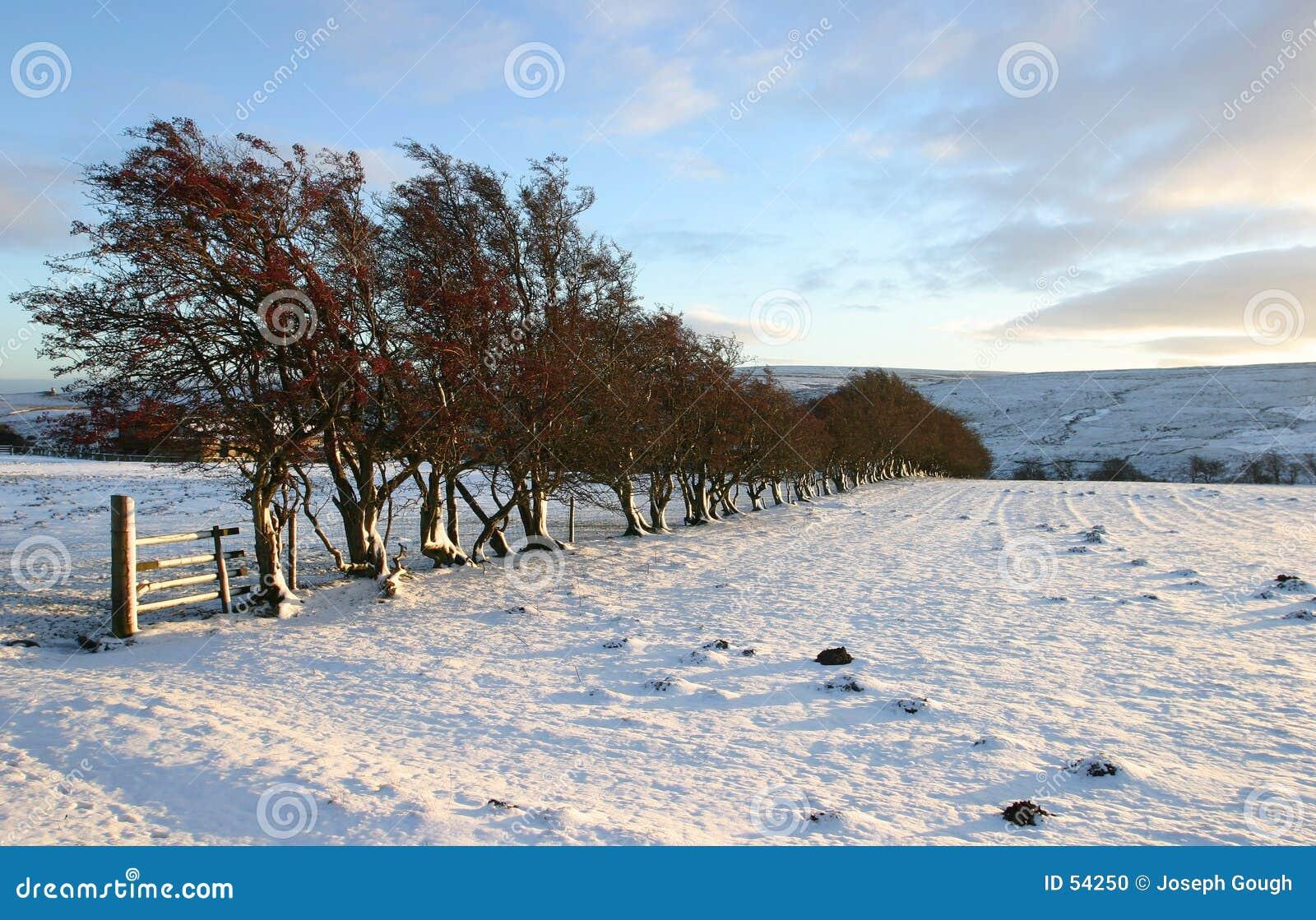 σκηνή χειμερινή