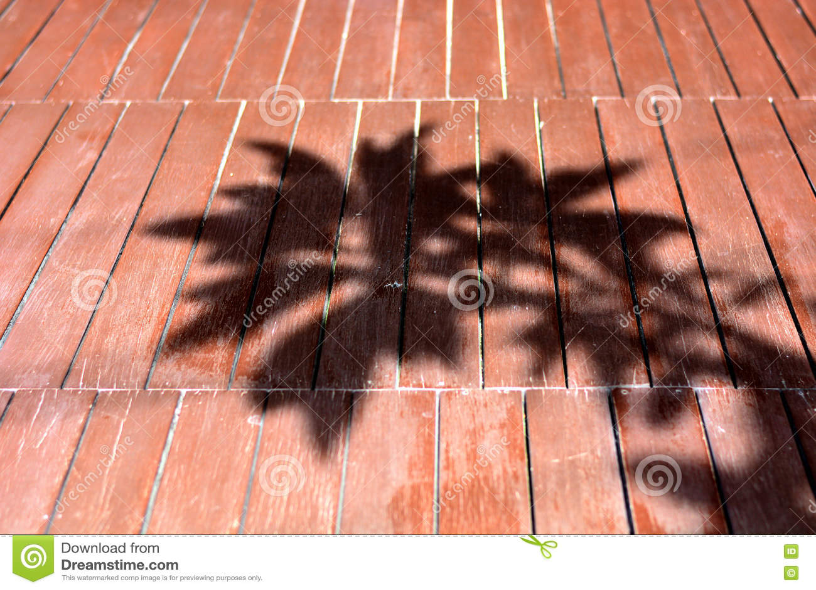 Σκιά δέντρων στο ξύλινο πάτωμα