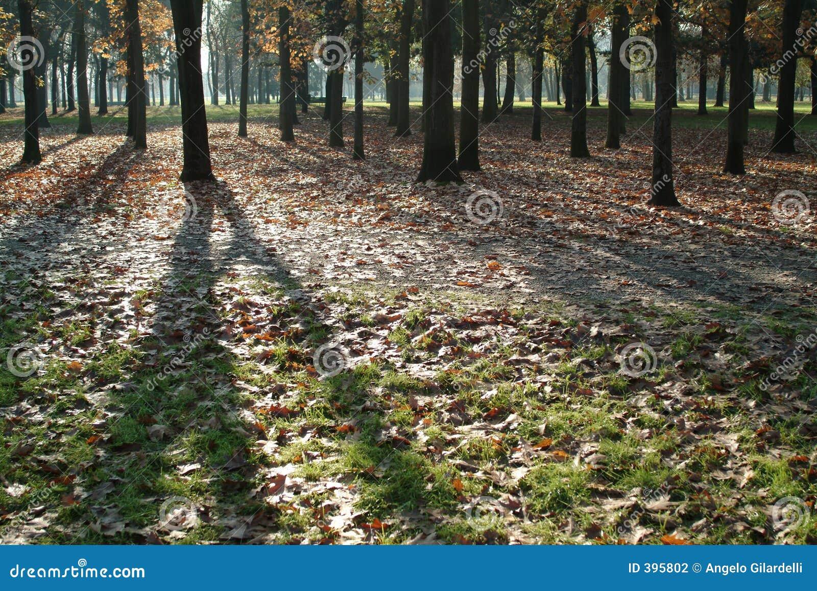 σκιές φύλλων φθινοπώρου