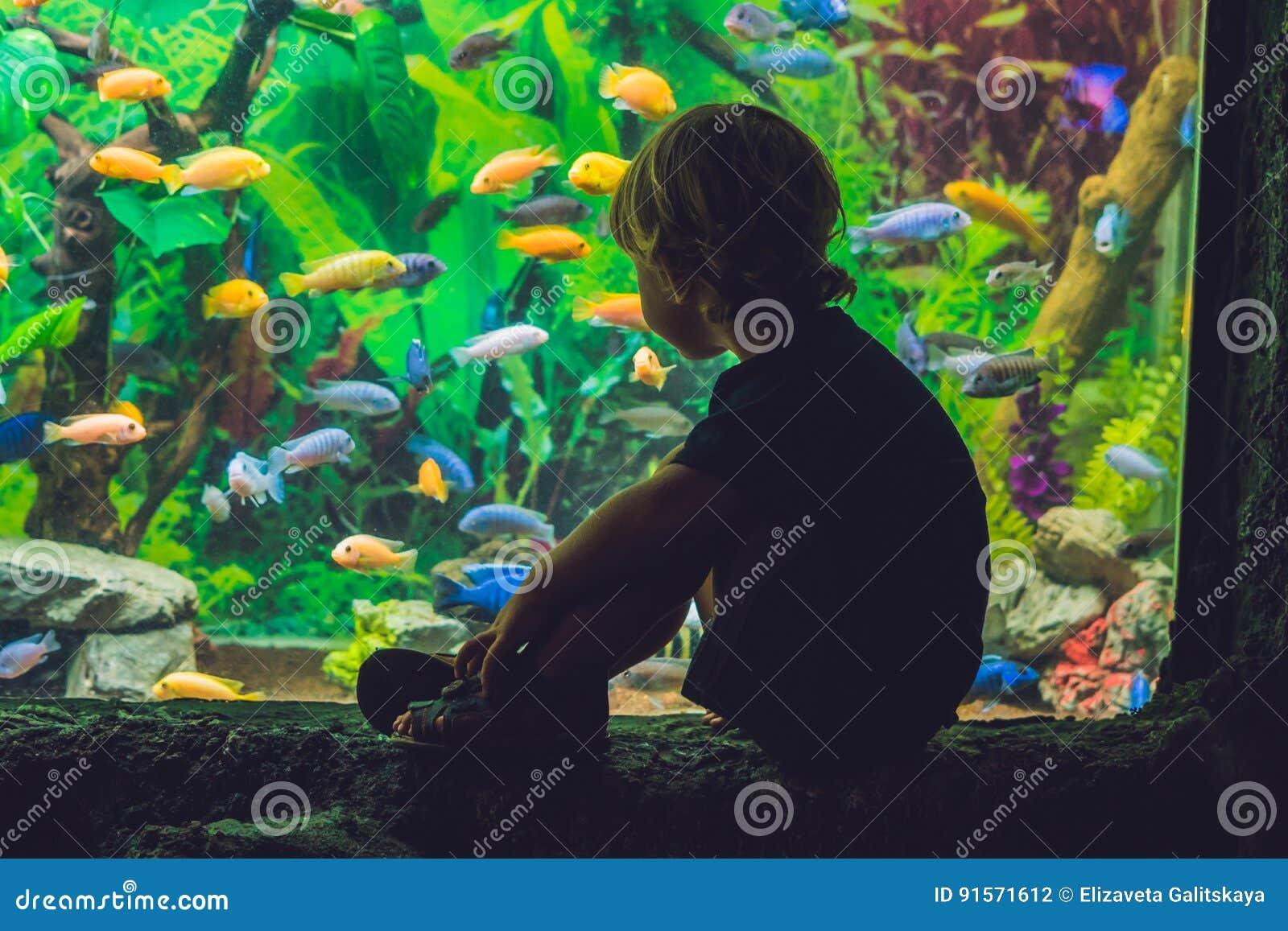 Σκιαγραφία ενός αγοριού που εξετάζει τα ψάρια στο ενυδρείο
