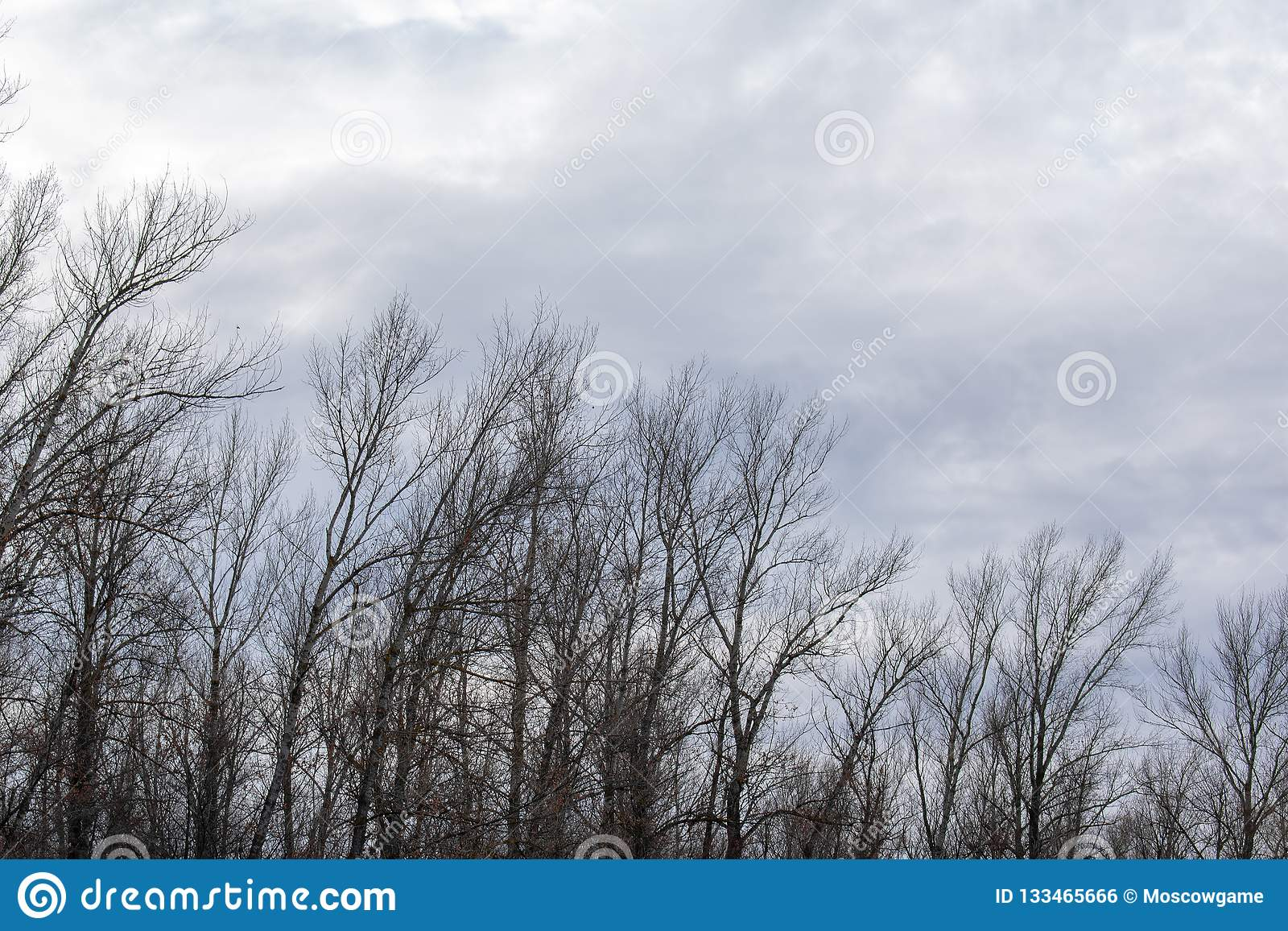 Σκιαγραφία ενός δέντρου ενάντια σε έναν ουρανό