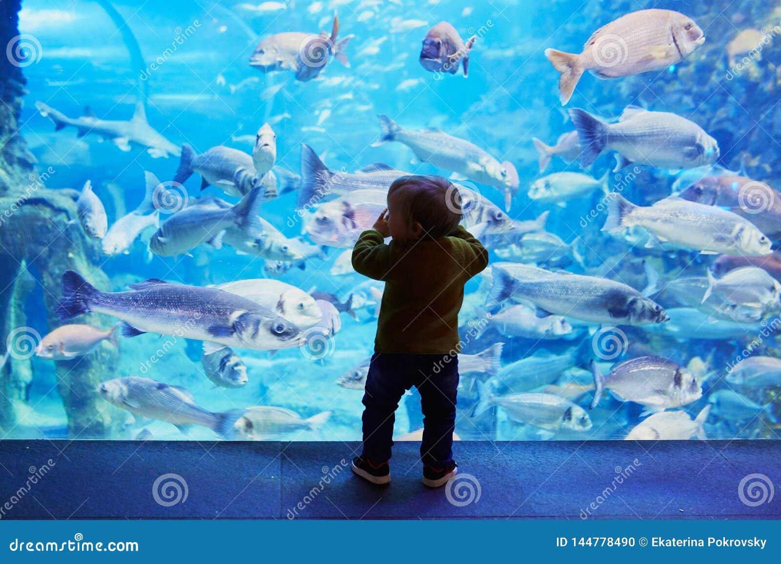 Σκιαγραφία λίγου παιδιού που απολαμβάνει τα τοπία της υποβρύχιας ζωής
