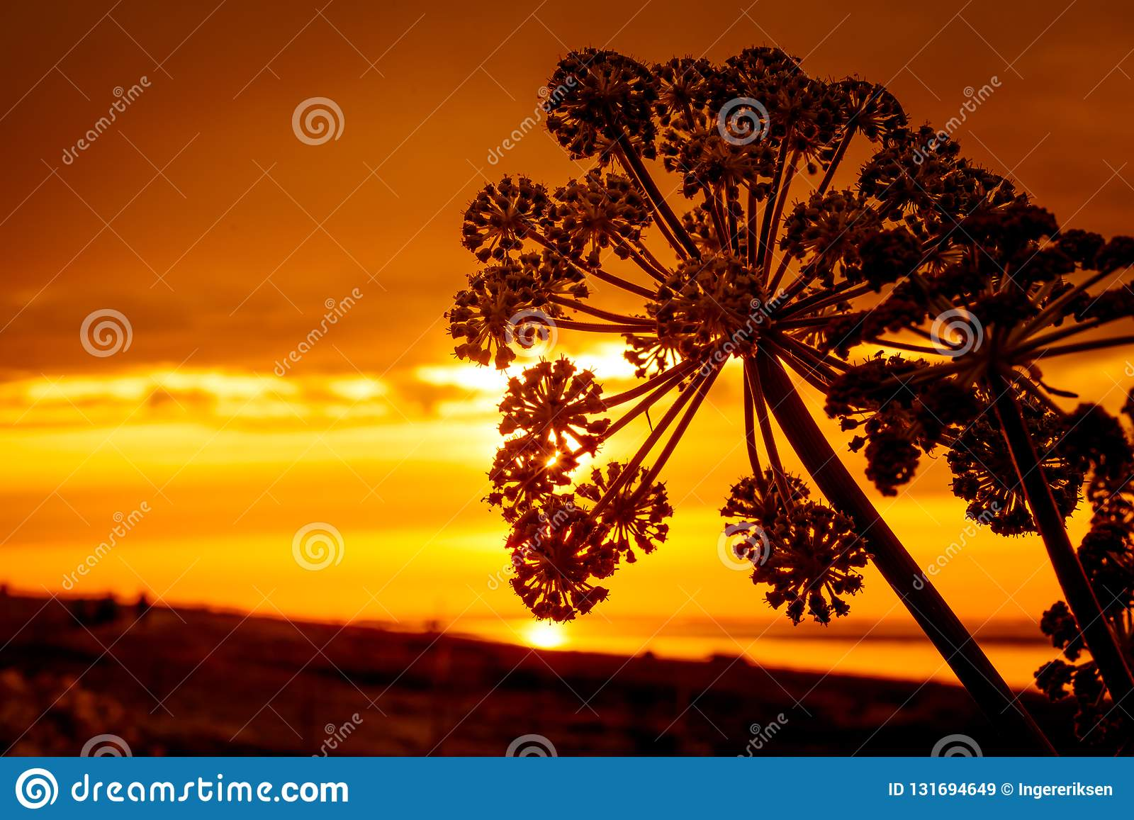 Σκιαγραφία του λουλουδιού σε ένα χρυσό ηλιοβασίλεμα