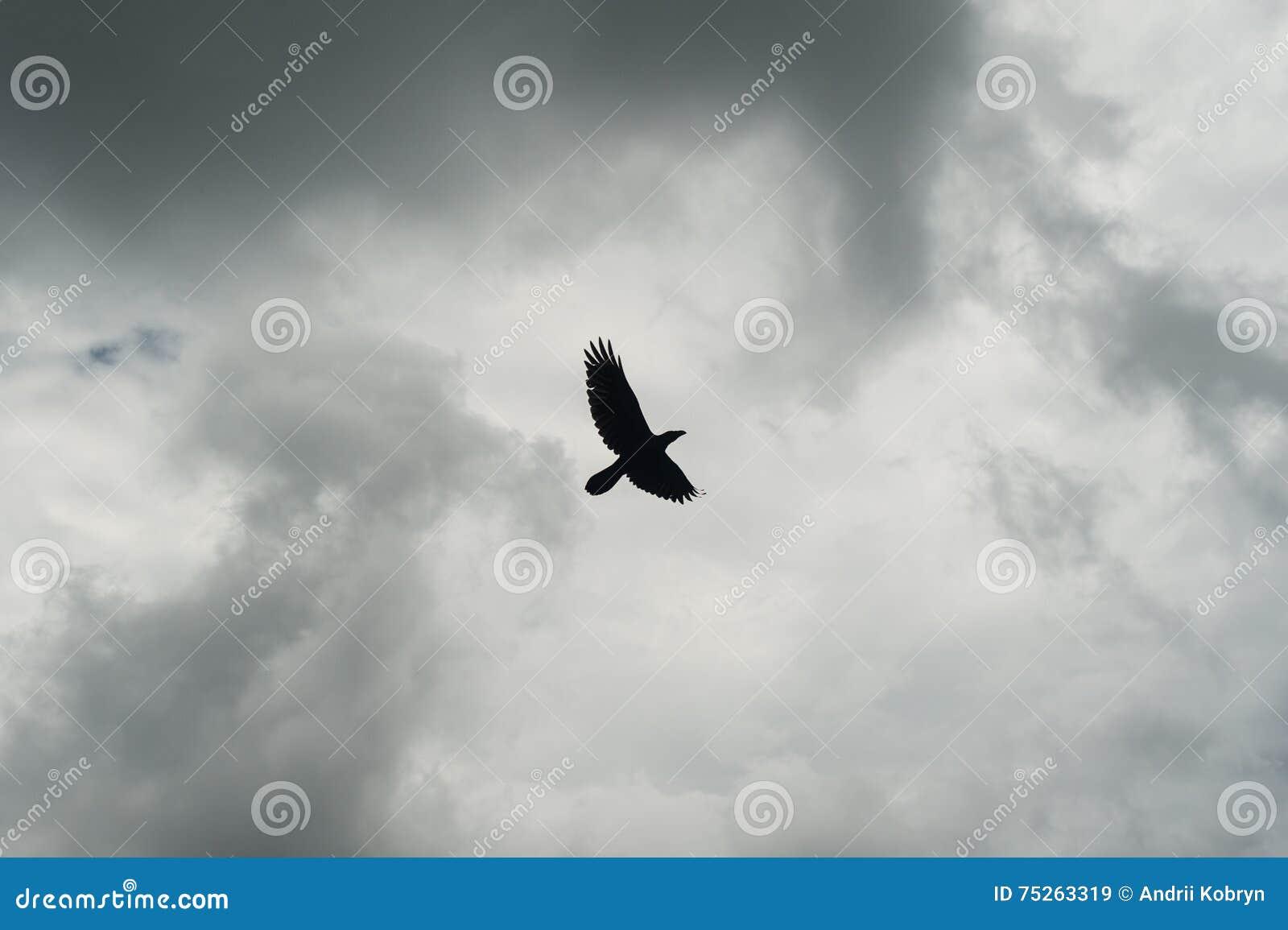 Σκιαγραφία του μαύρου κόρακα που πετά πέρα από τον γκρίζο ουρανό Πιέζοντας δραματικό υπόβαθρο