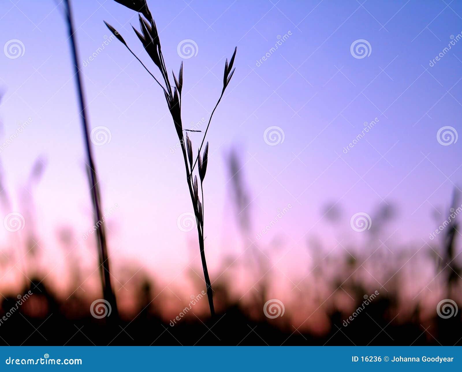 σκιαγραφία 3 φυτών