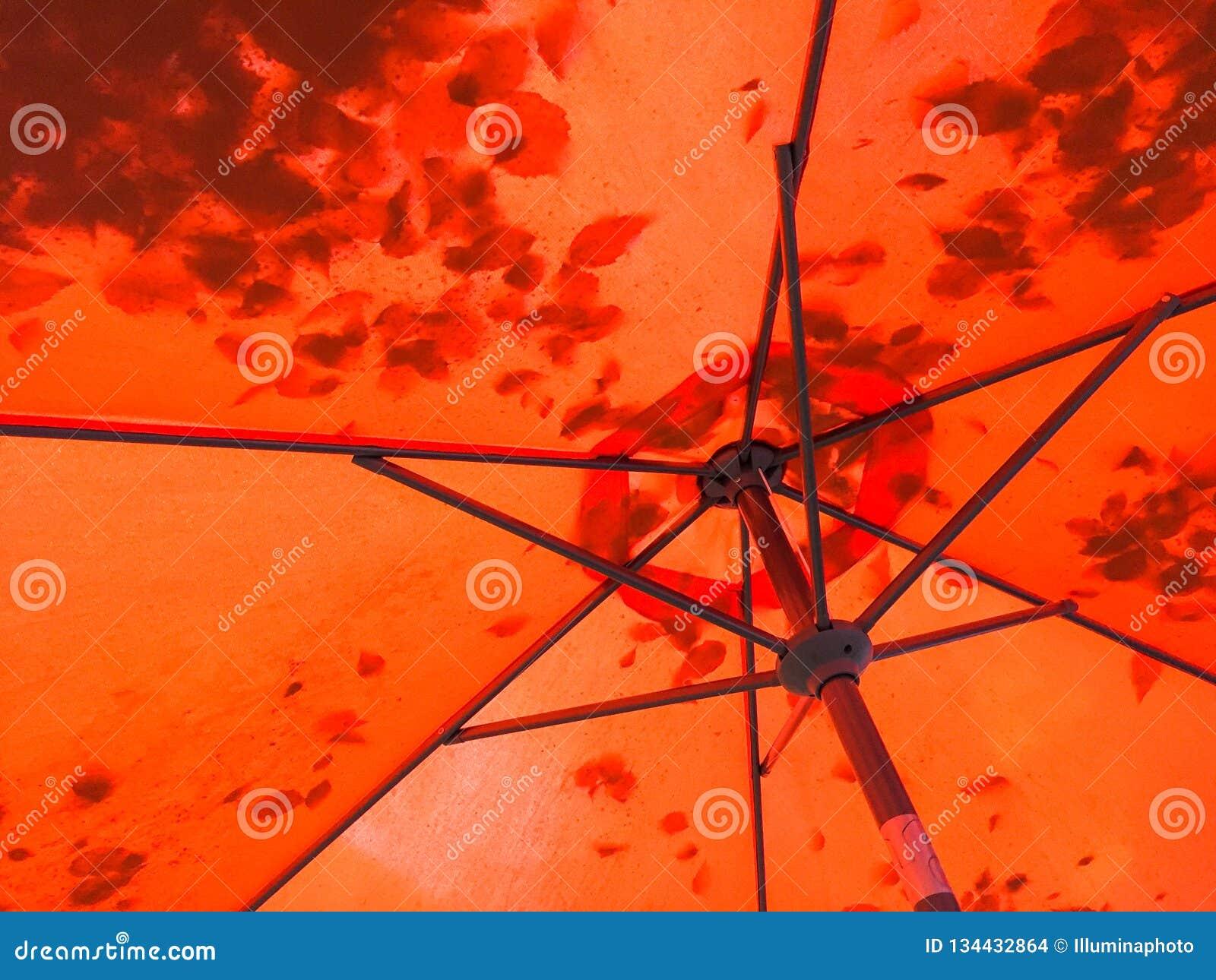 Σκιαγραφίες σκιών φύλλων μέσω μιας κόκκινης ομπρέλας patio