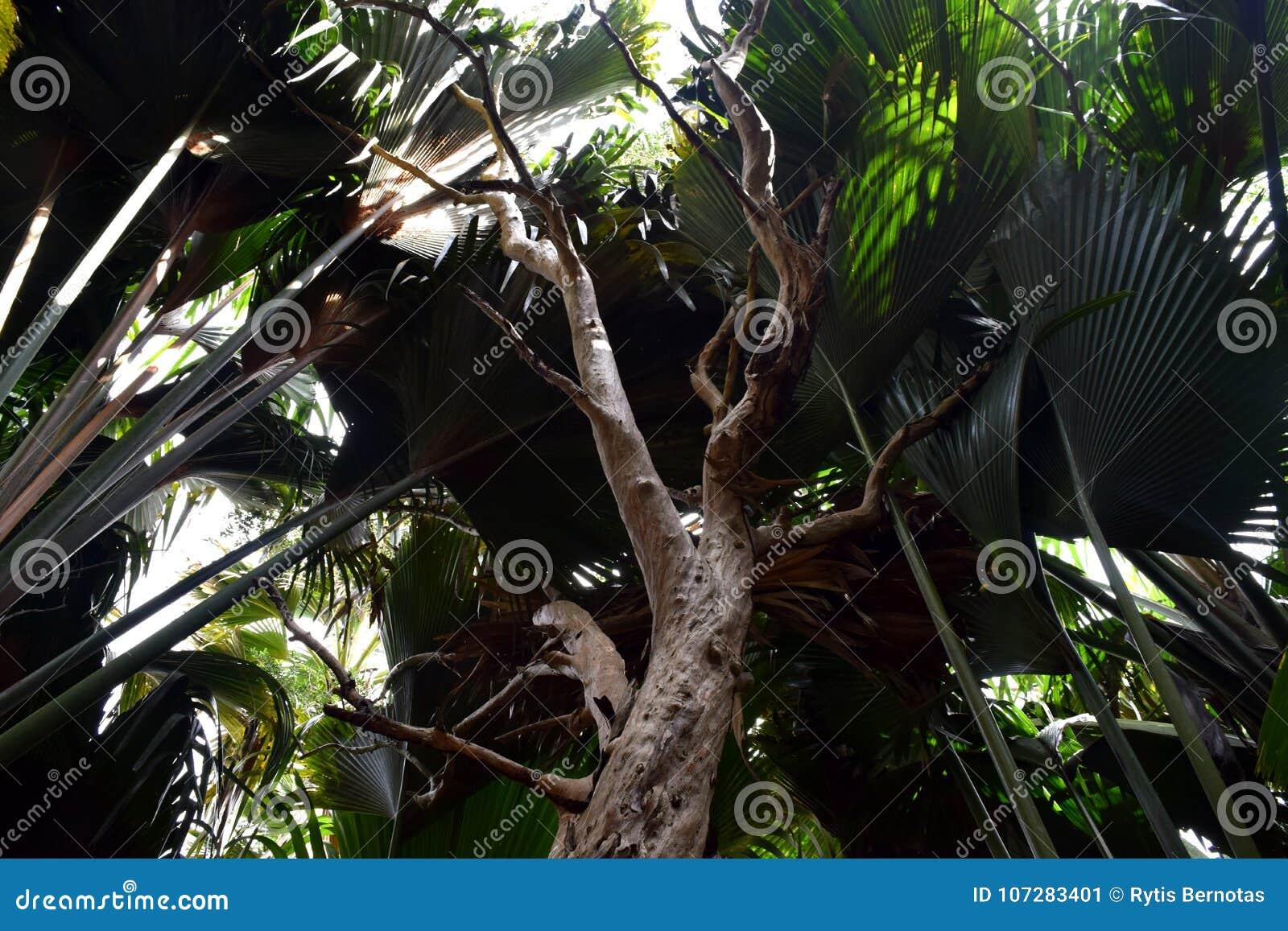 Σκοτεινό τροπικό δάσος στις Σεϋχέλλες