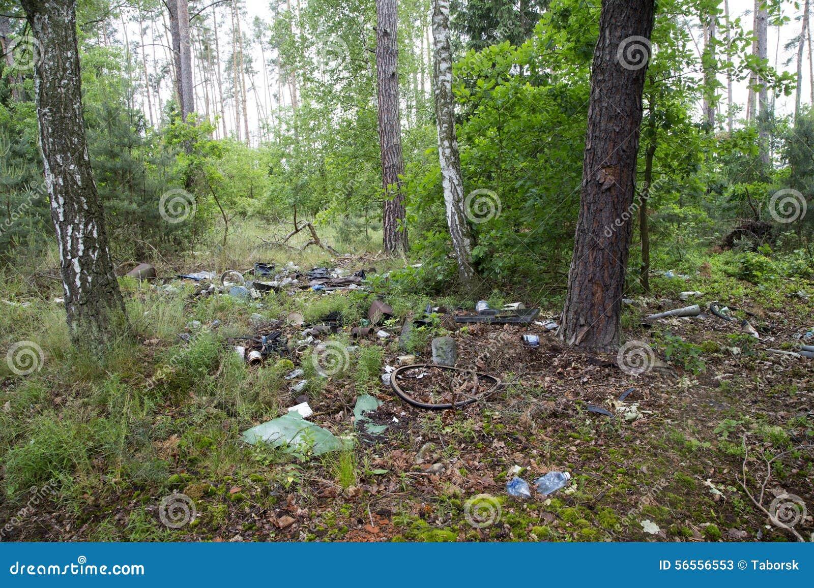 Download Σκουπίδια στο δάσος στοκ εικόνα. εικόνα από κύρωση, πλαστικό - 56556553