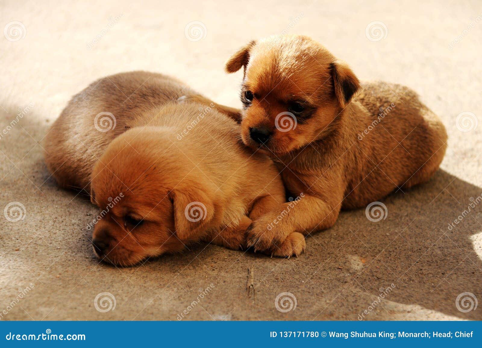 Σκυλί  ένα επώνυμο