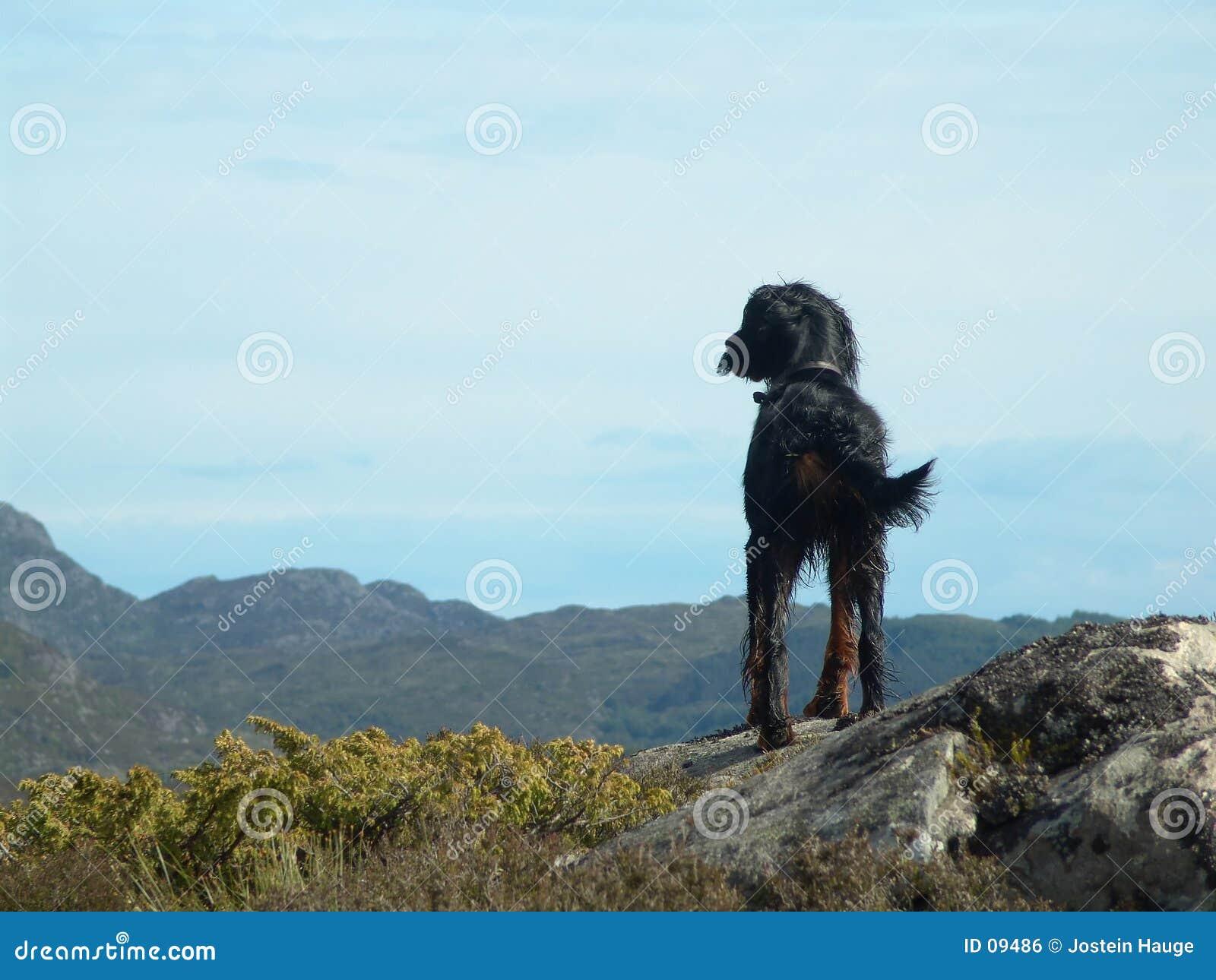 σκυλί απομονωμένο