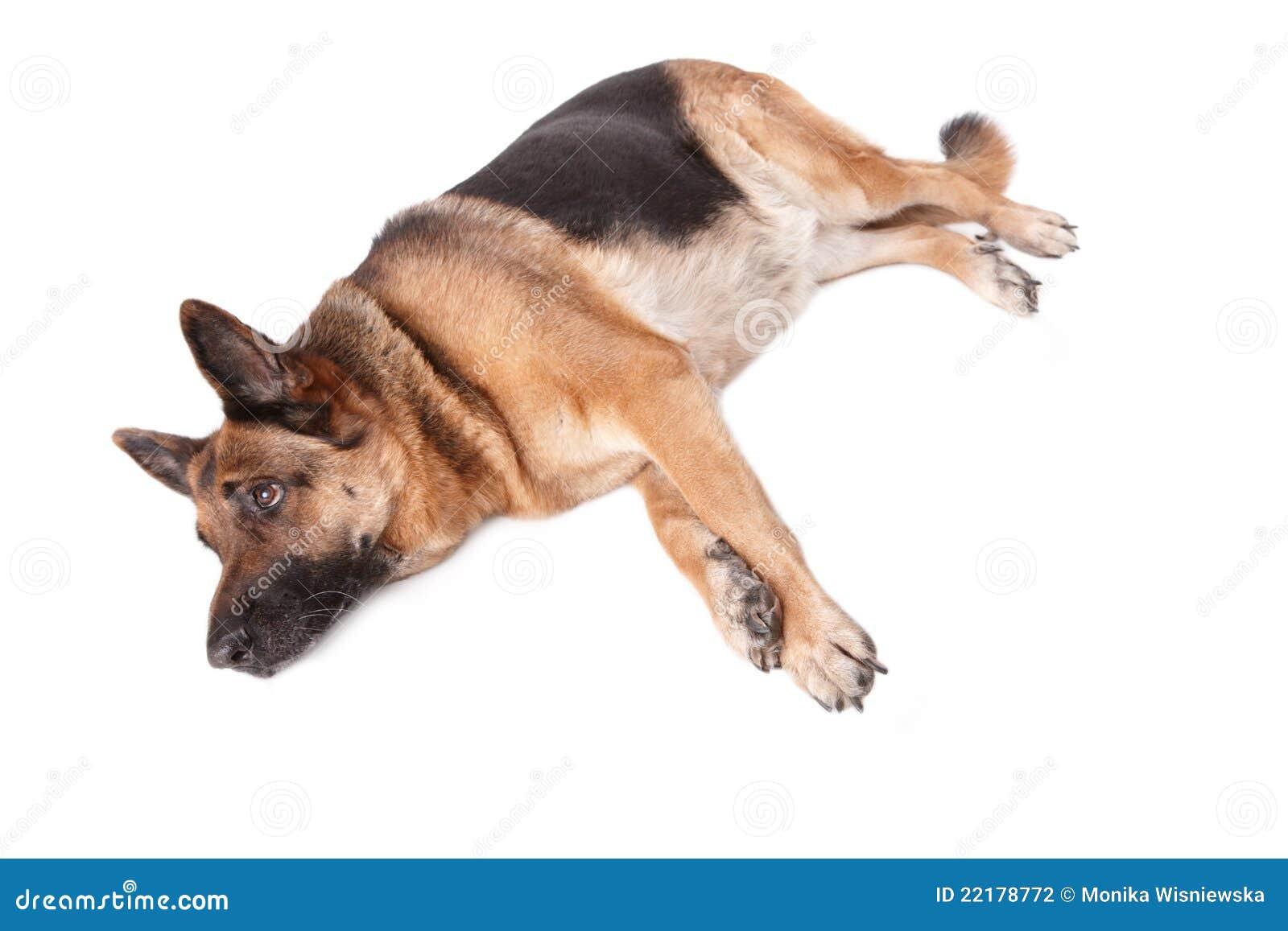 σκυλί γερμανικά που βάζε&