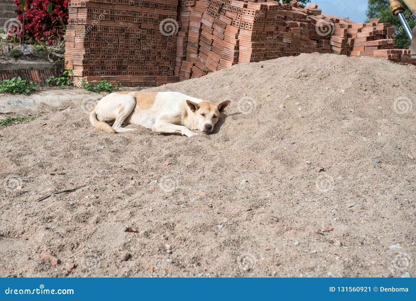 Σκυλί για να στηριχτεί στον ήλιο