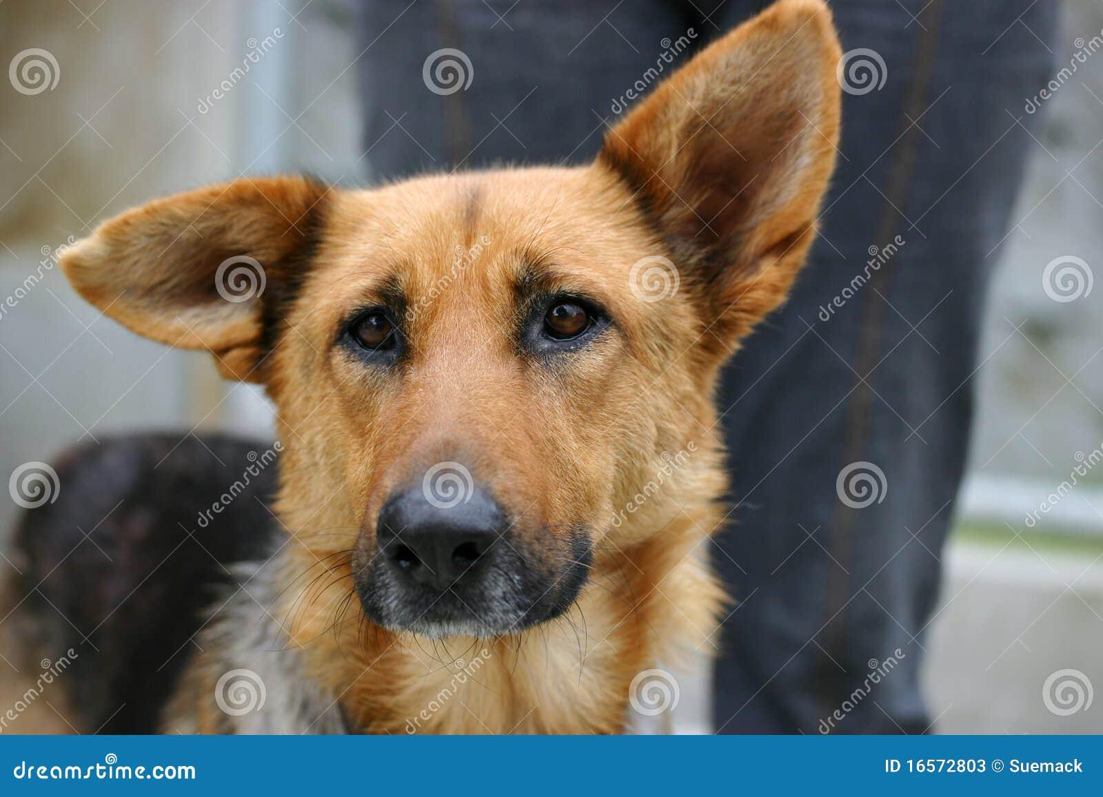 σκυλί λυπημένο