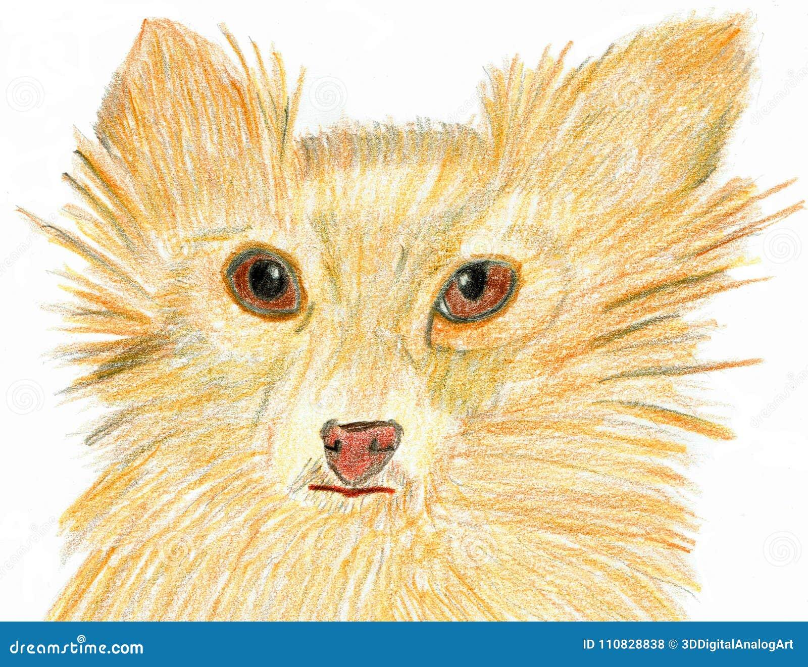 Σκυλί με τα θαυμάσια ονειροπόλα μάτια