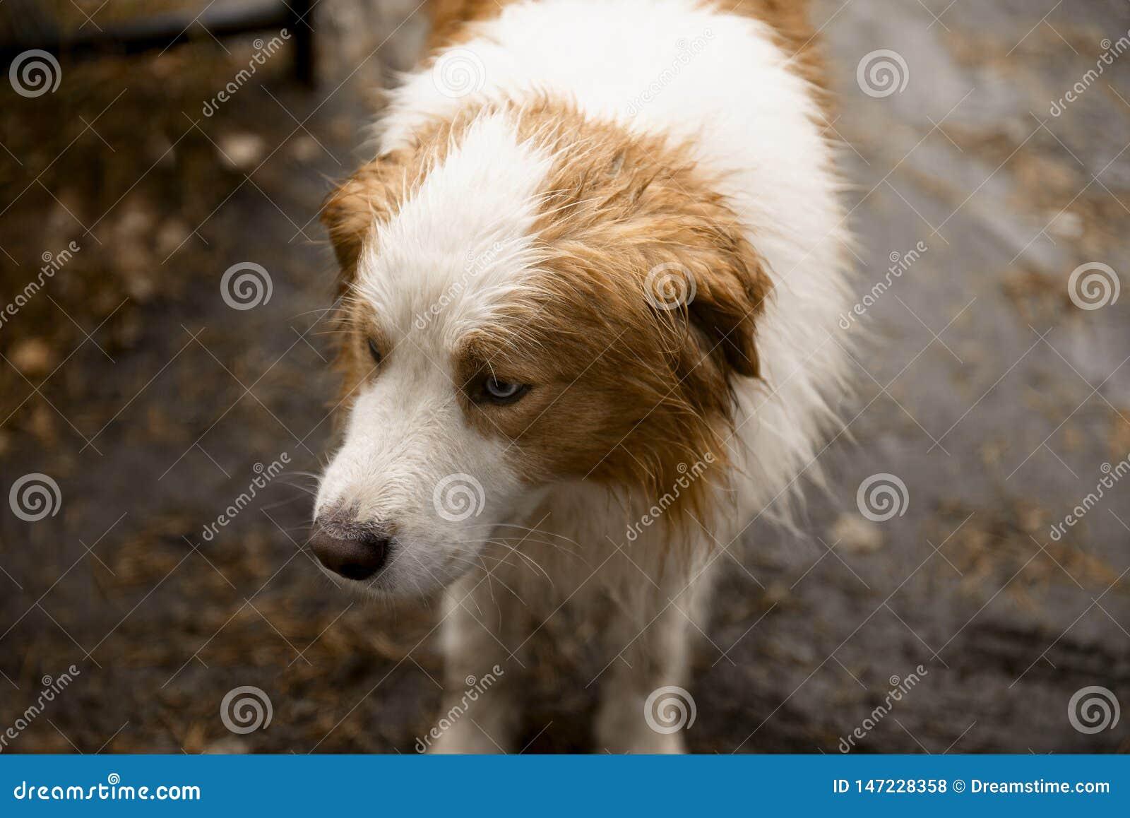 Σκυλί με την κόκκινη κινηματογράφηση σε πρώτο πλάνο σημείων