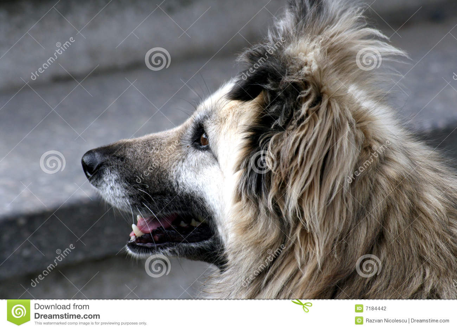 σκυλί μου