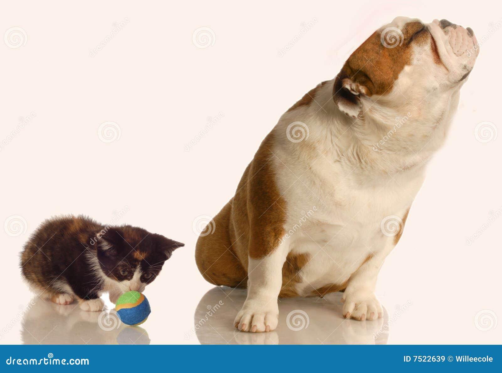 σκυλί που αγνοεί το γατά&