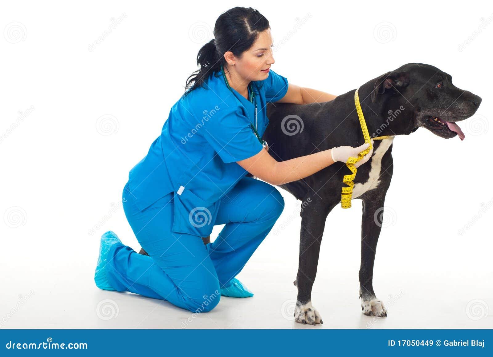 σκυλί που μετρά το λαιμό κ