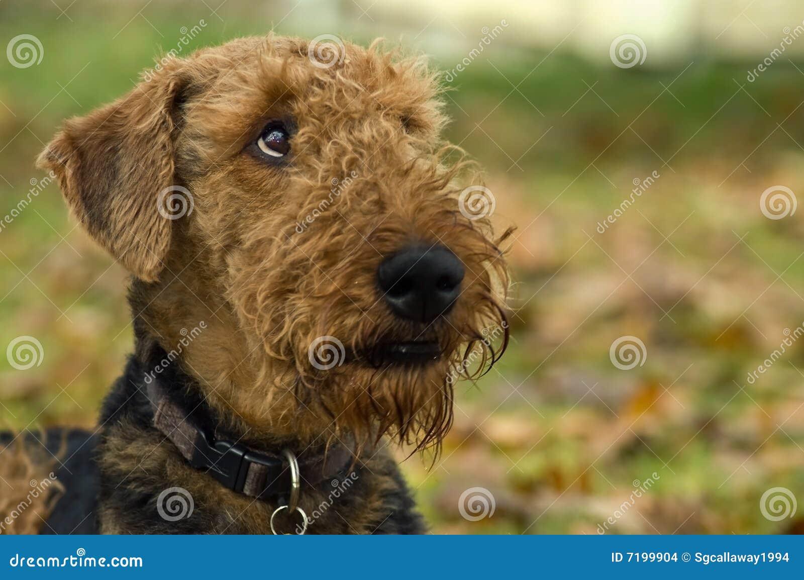σκυλί που φαίνεται ανοδικό