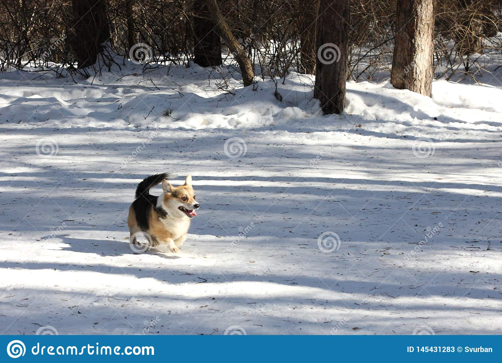 Σκυλί στο χειμερινό πάρκο