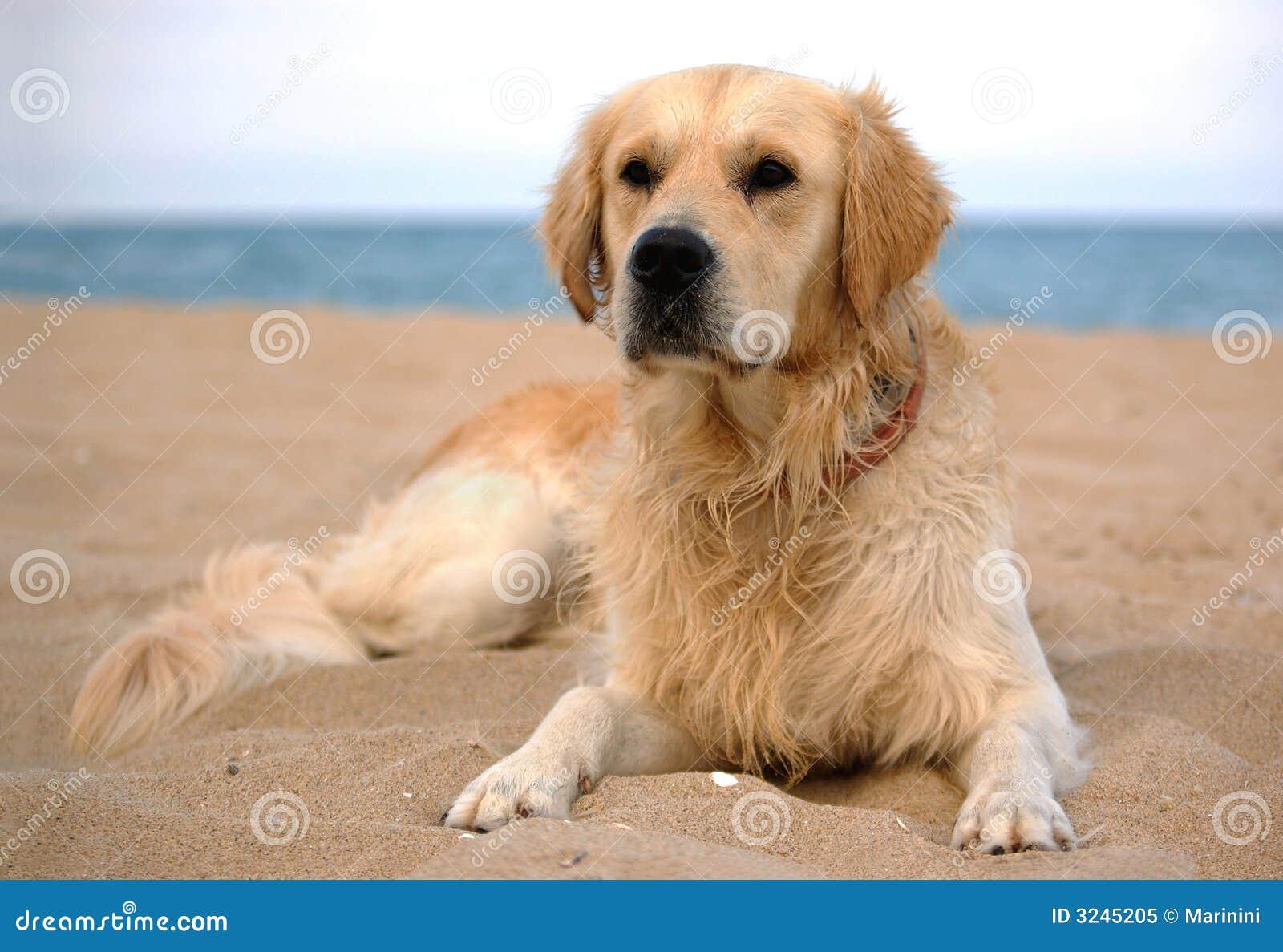 σκυλί 2