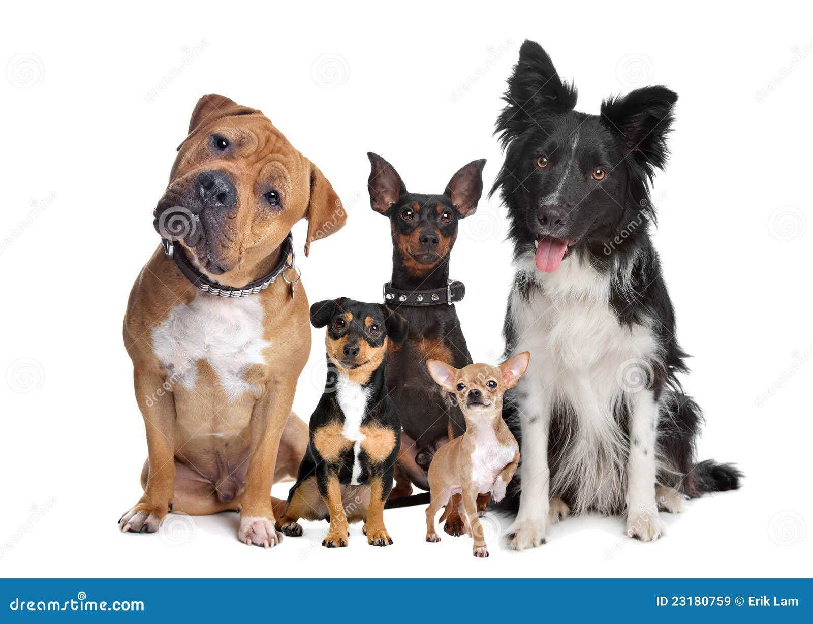 σκυλιά πέντε ομάδα